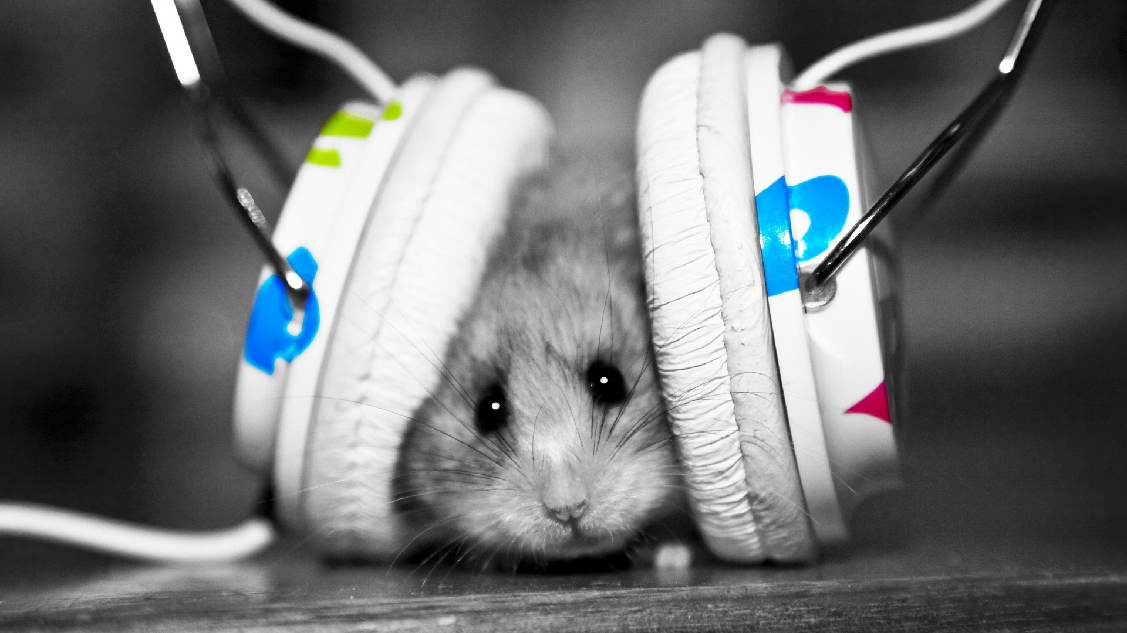 Preview wallpaper funny, music fan, music, little, hamster 3840×2160