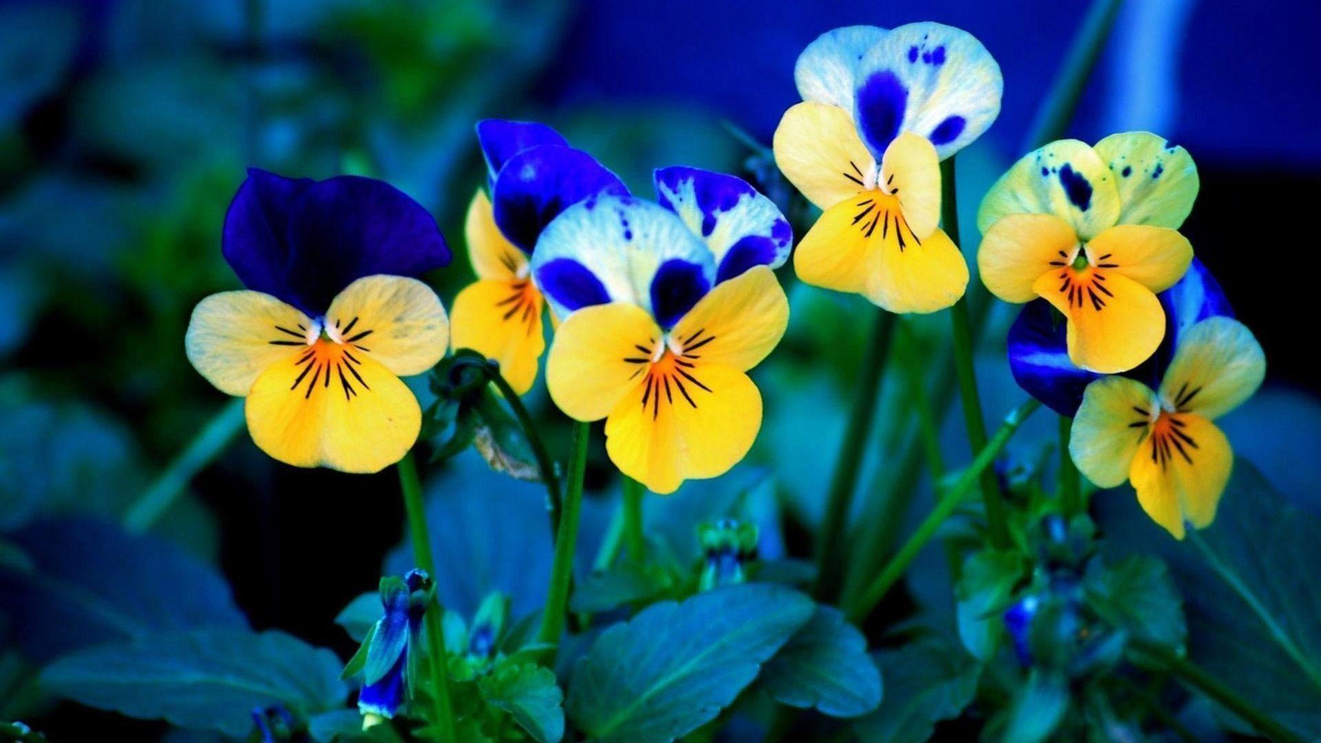Beautiful Nature Puter Wallpaper Hd Desktop 10 HD Wallpapers   Eakai.