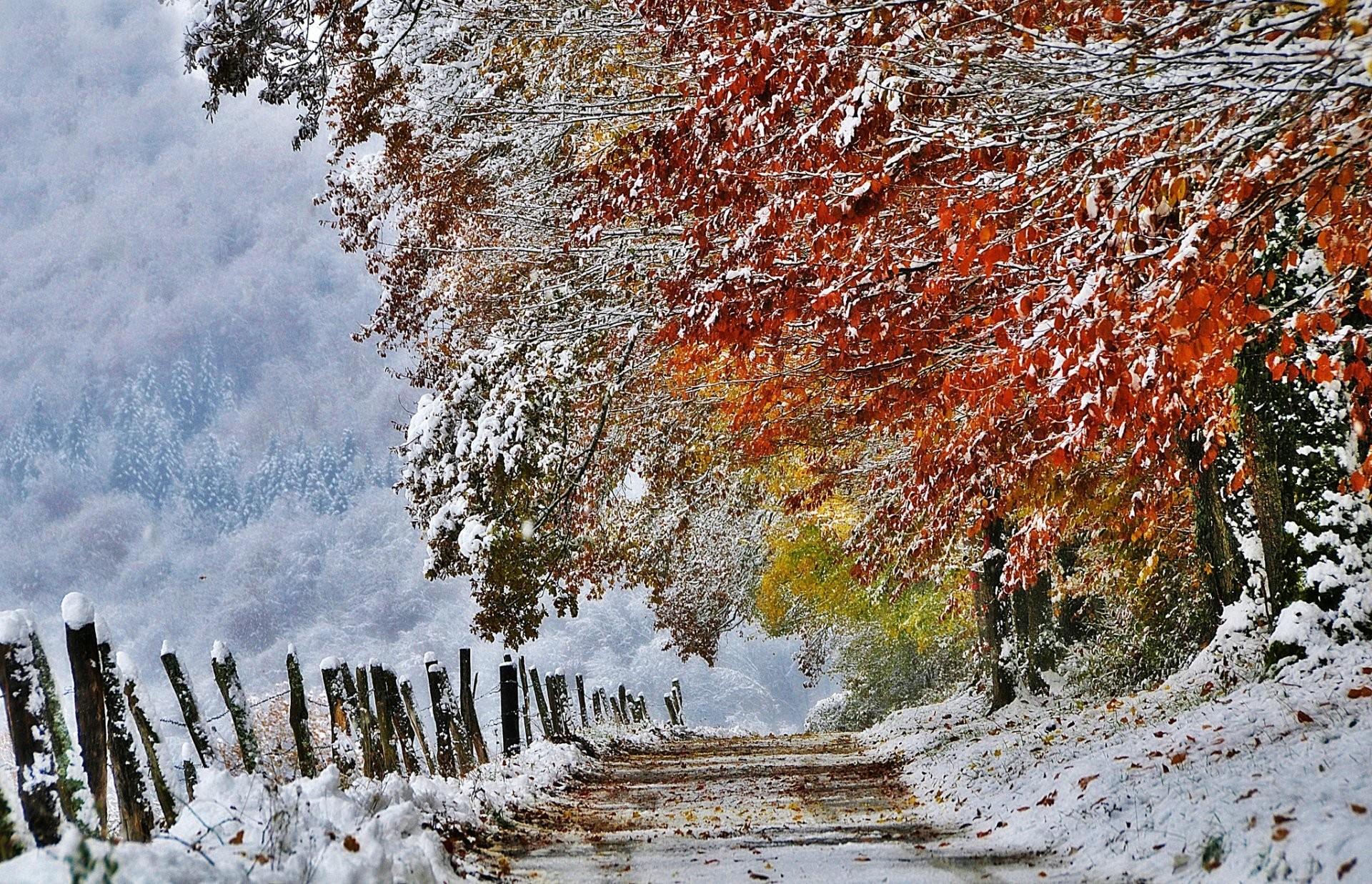 nature france autumn november snow