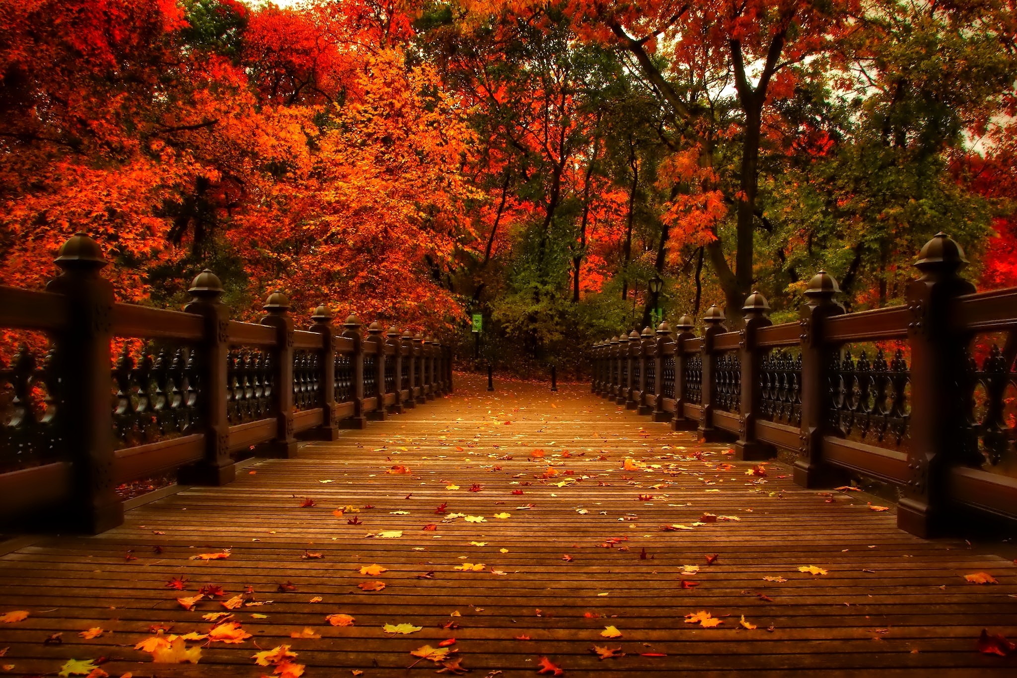 November Colorful Golden Shine Tree Glow Branches Autumn Colors Nice Fall  Nature Beautiful Lovely Reflection Foliage