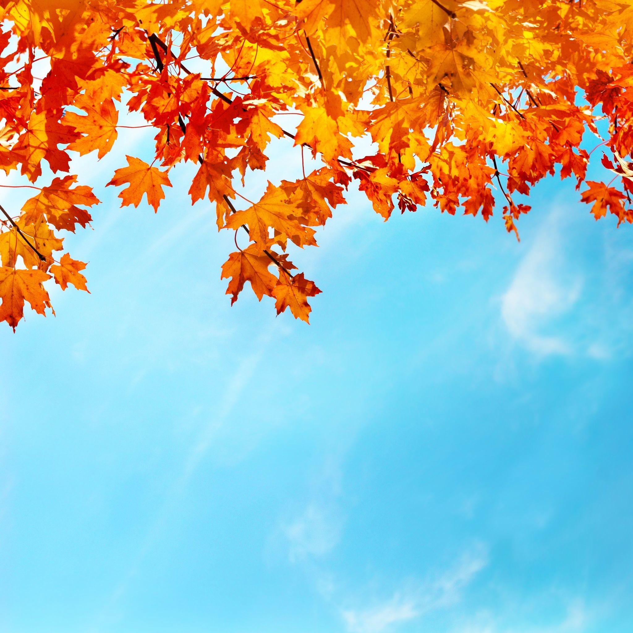 #autumn #leaves #sky #september #october #november #bye #bye
