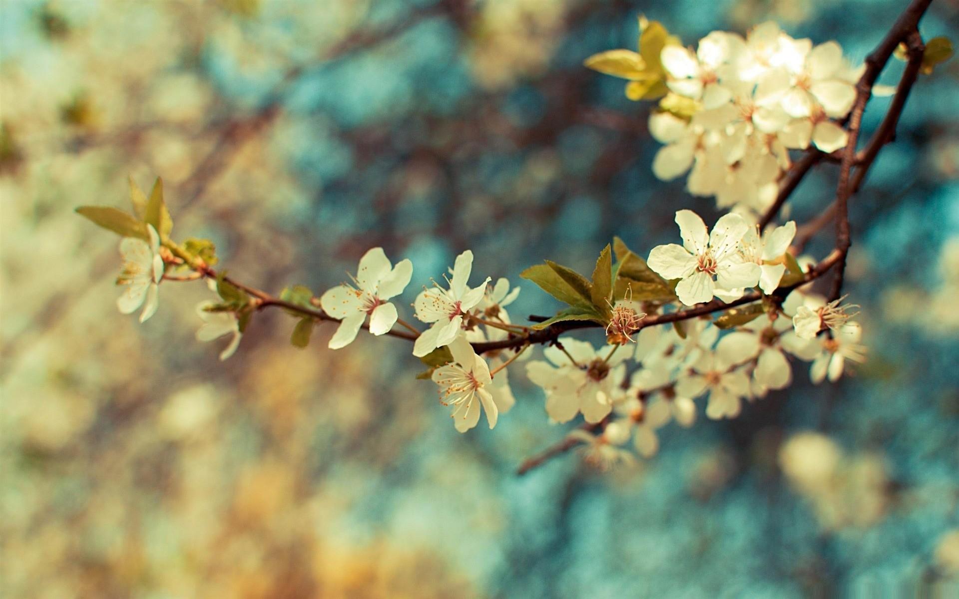 Beautiful Desktop Spring HD Wallpapers 1920×1200.