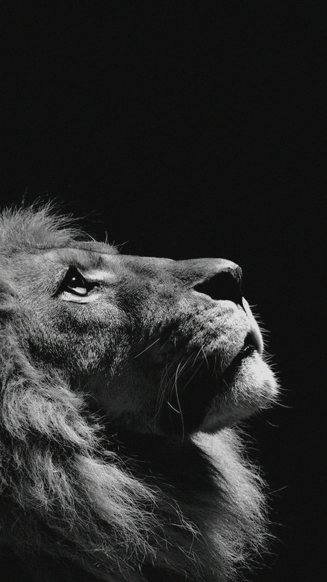 wallpaper.wiki-Lion-Looking-Sky-Animal-Nature-Dark-