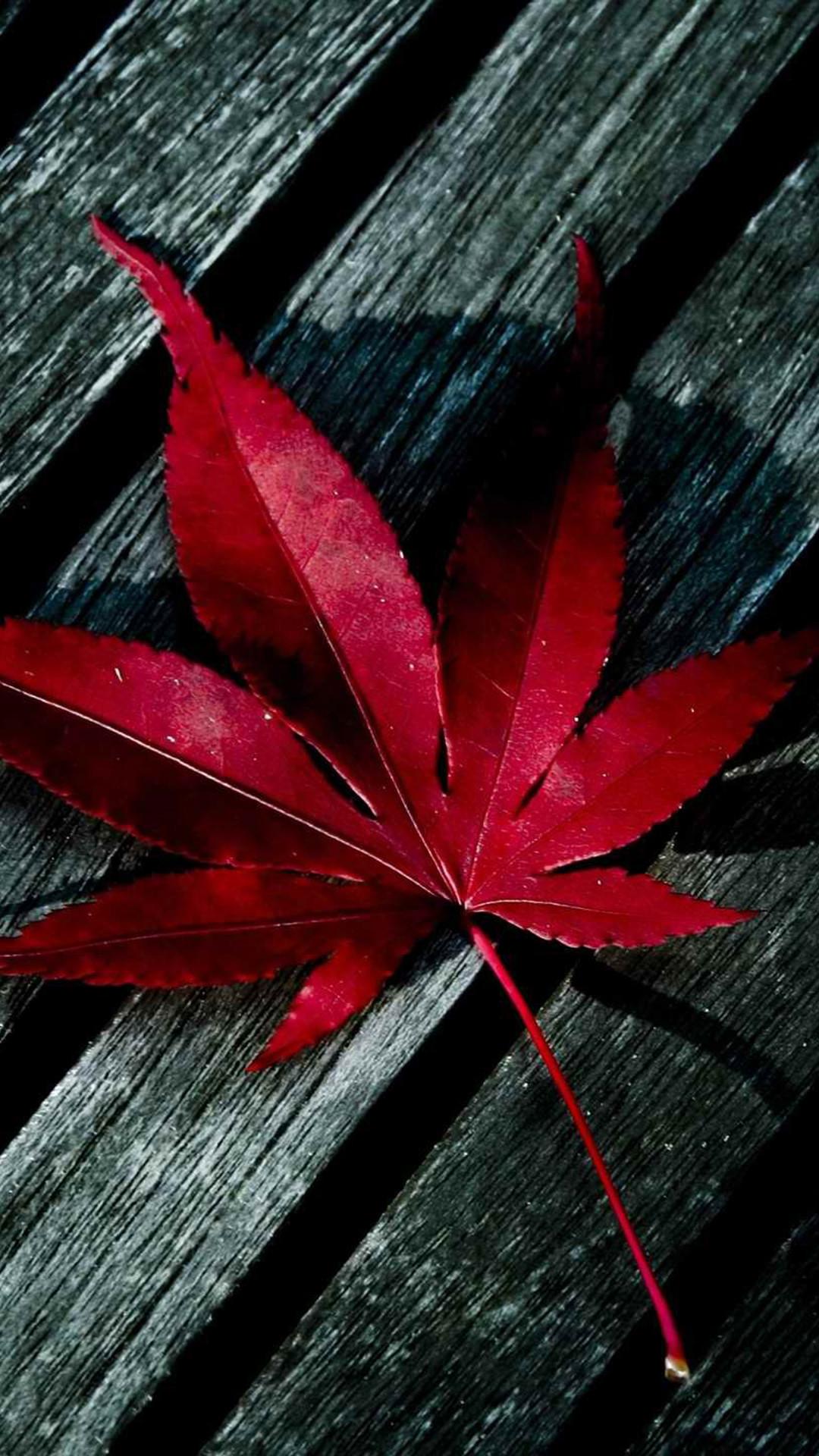 iPad retina wallpaper nature red iphone 1080×1920.
