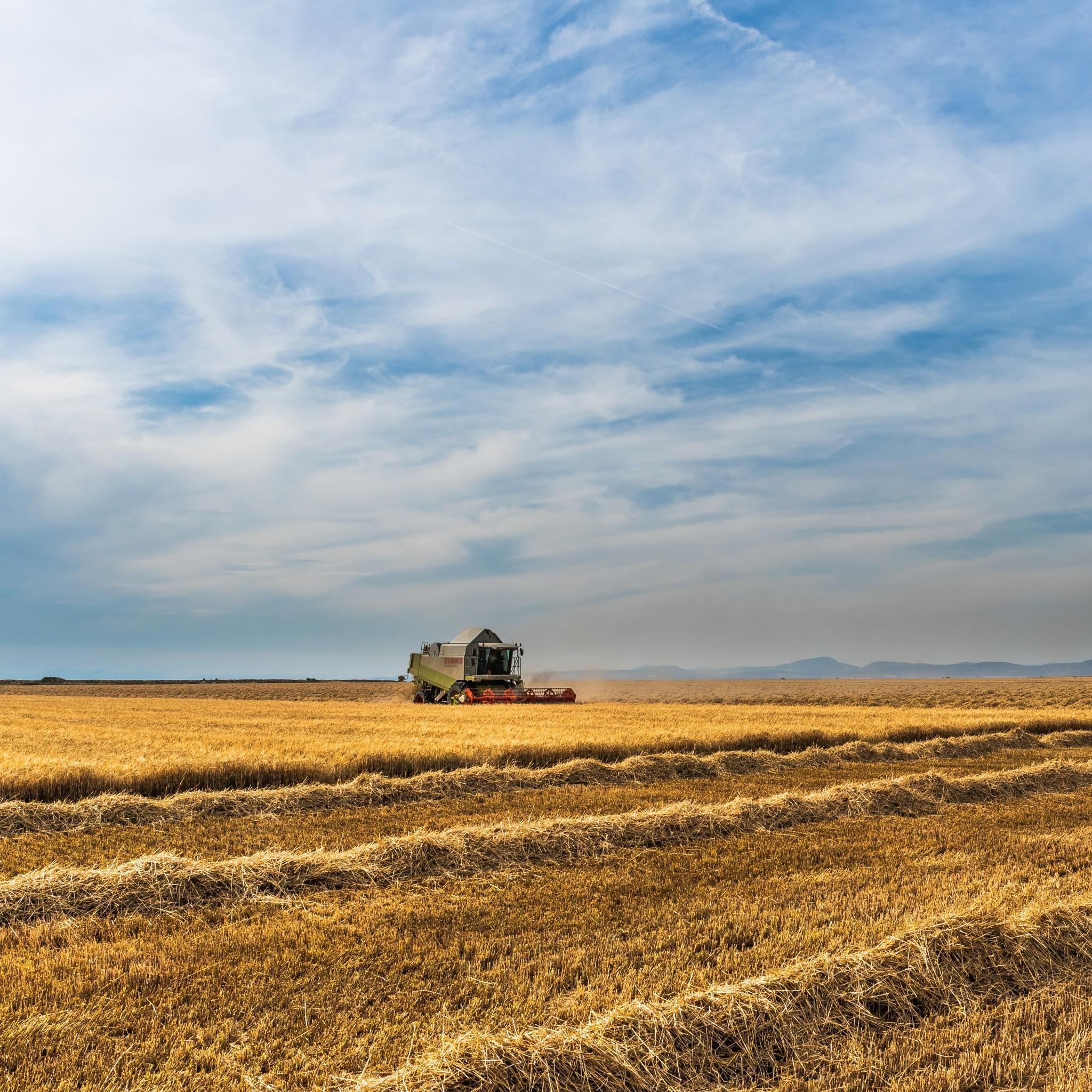 Preview wallpaper field, farm, crop, field crops 2048×2048