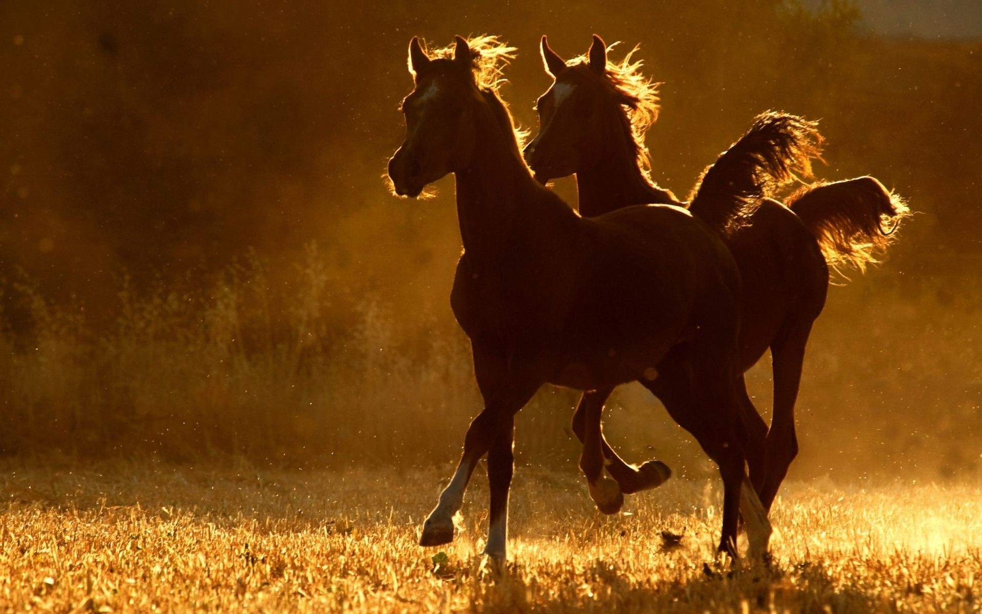 Horse Farm HD Wallpaper, Horse Farm Desktop Backgrounds