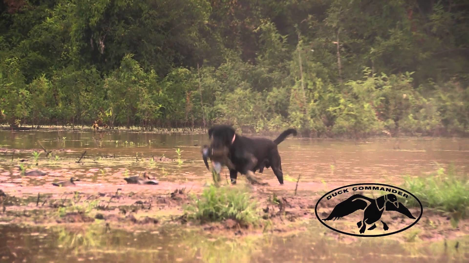 Update from the Duck Commander Blind #6