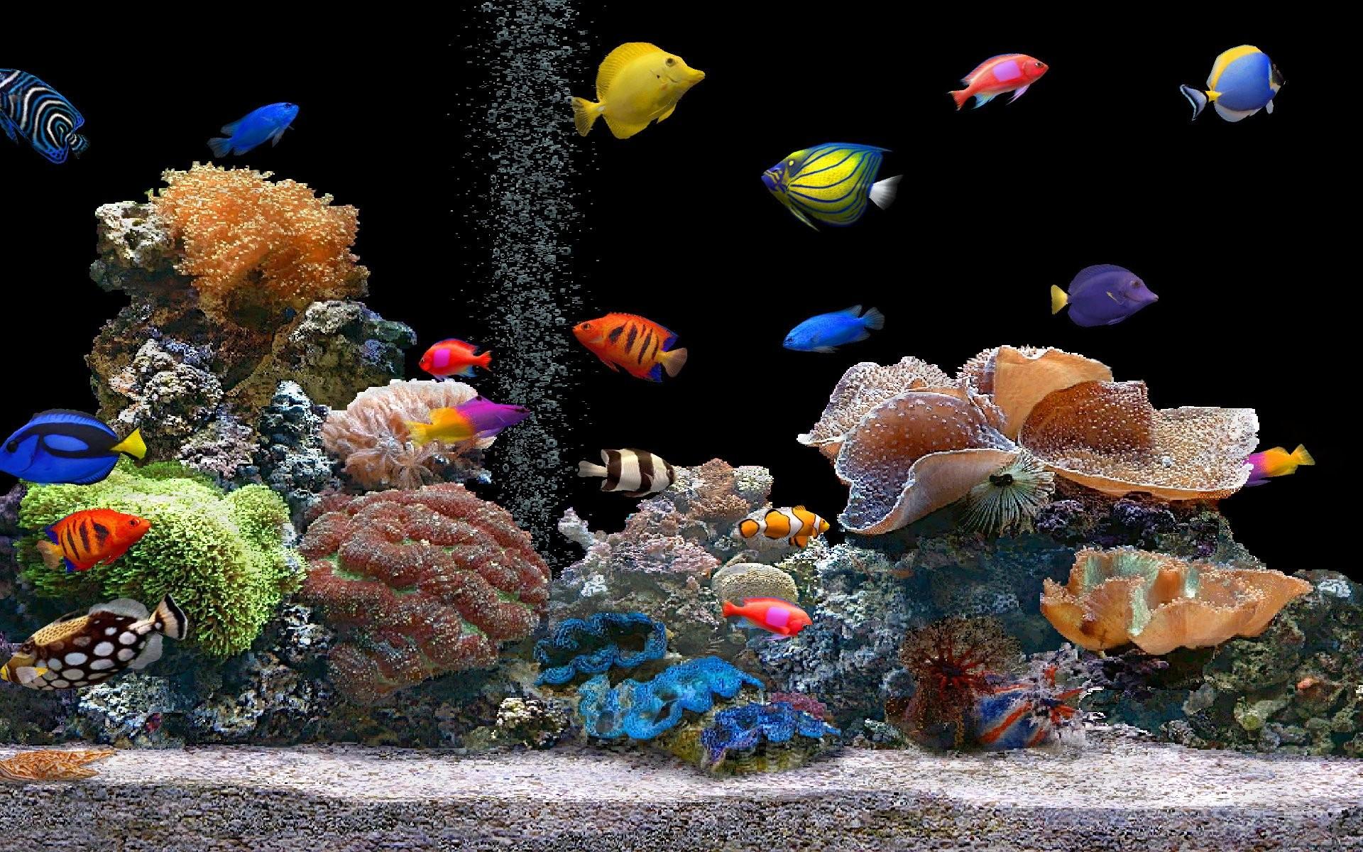 Aquarium Colorful Screensavers wallpapers HD free – 138274