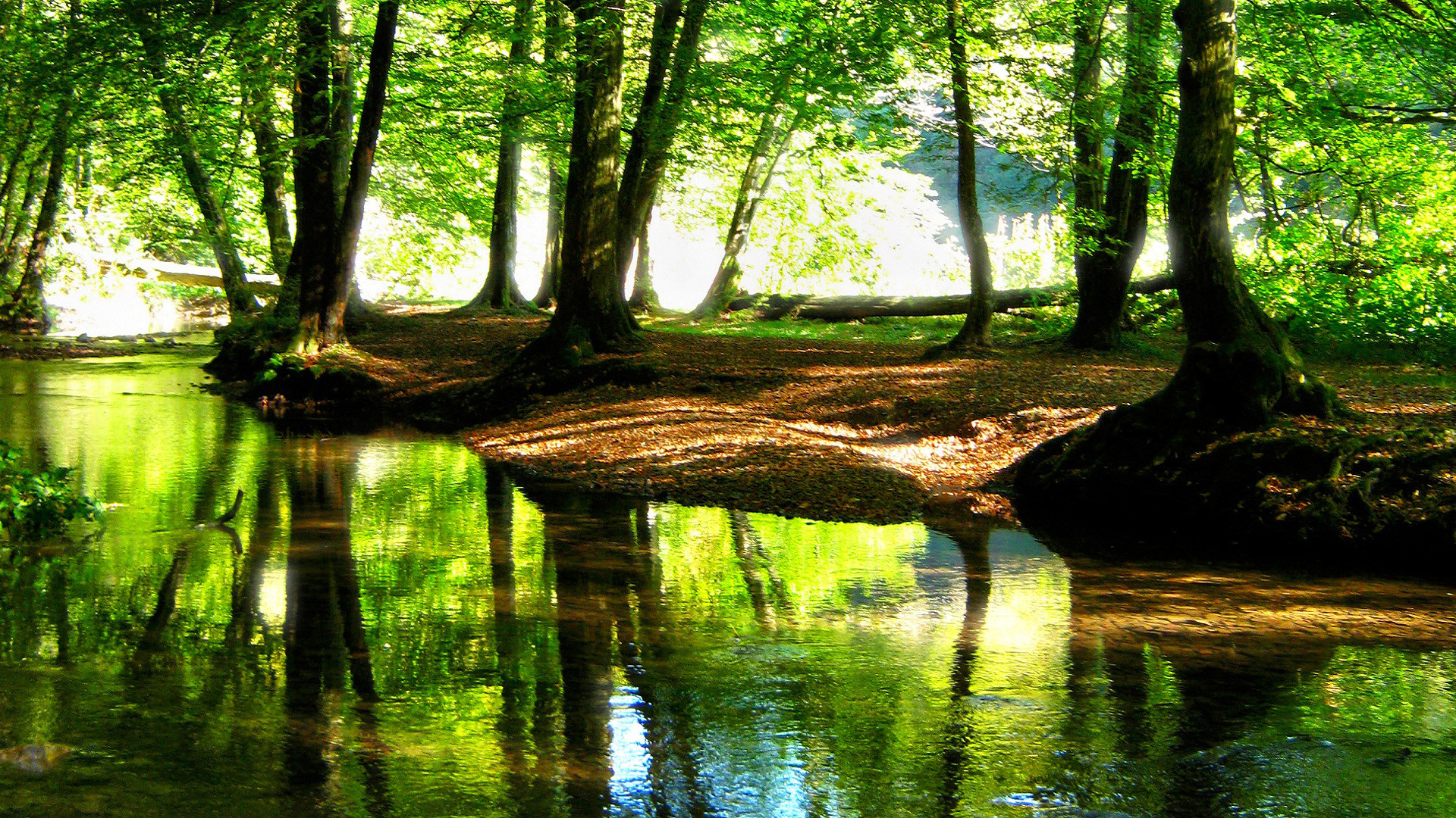 HD Landscape Wallpapers beautiful stream in a cool Forst River Nature  Wallpapers ,beads,forest stream.