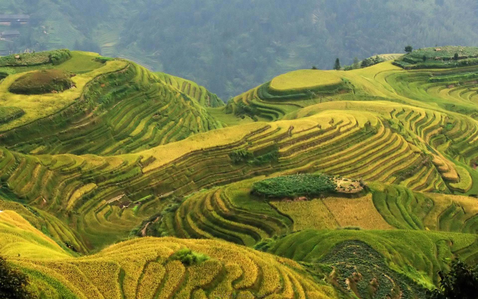 china landscape – Google zoeken