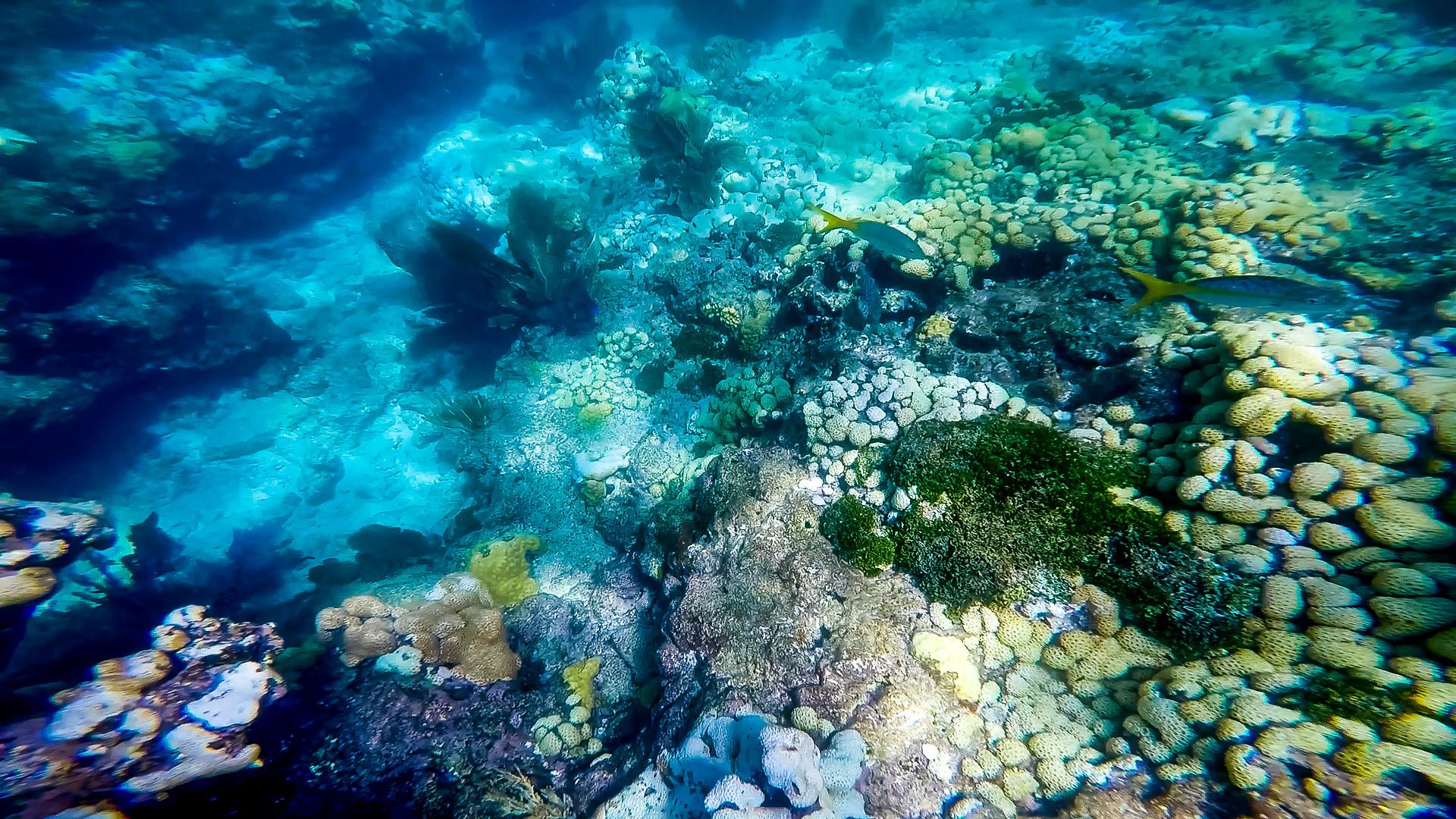… Keys Reef Snorkel – Sunset Watersports – Key West, FL – Coral Reef Guide