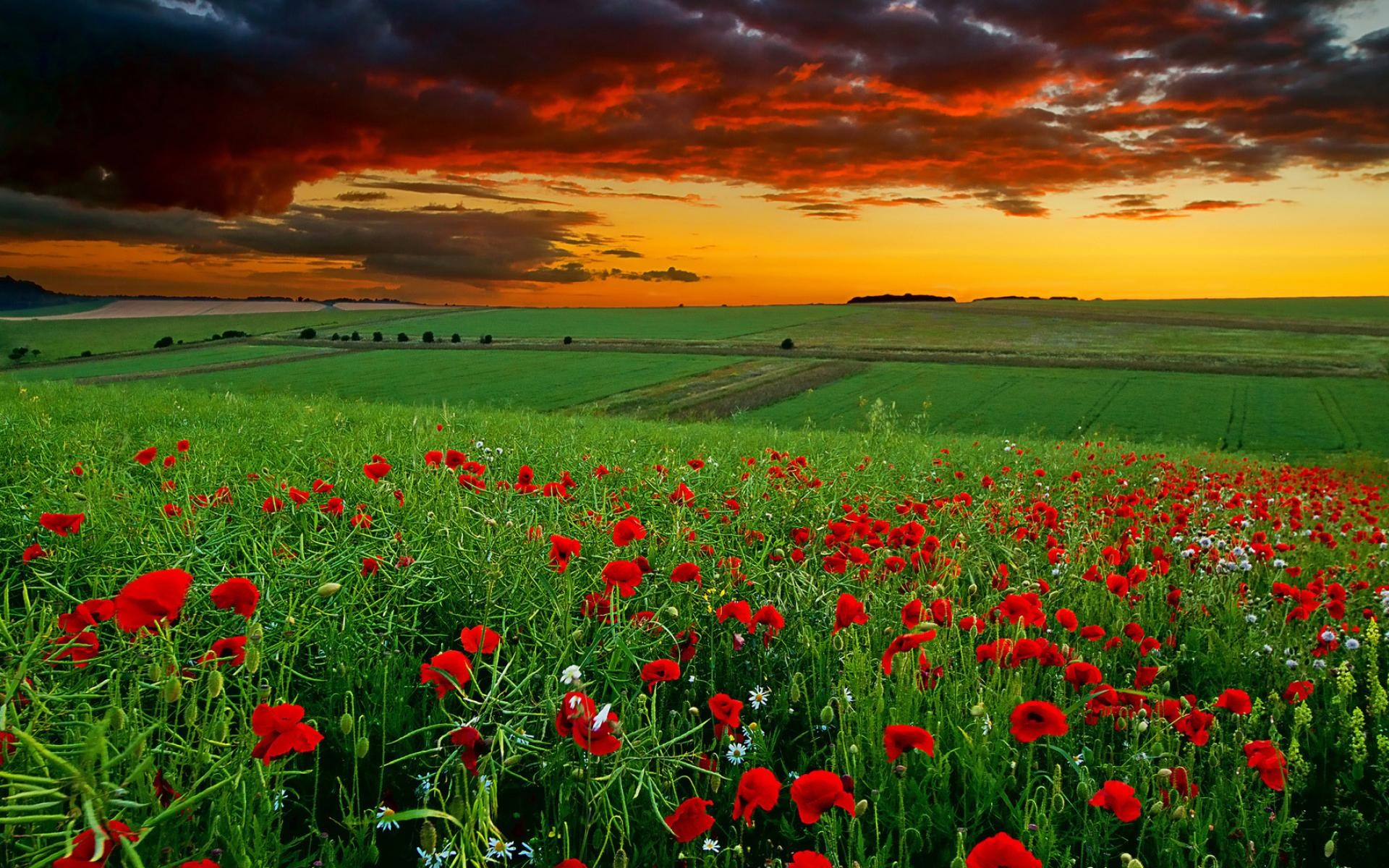 Scenery Wallpapers HD Pictures   One HD Wallpaper Pictures Backgrounds .