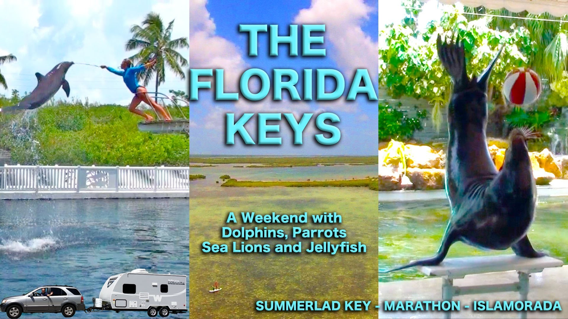 Florida Keys: A Holiday Weekend with Dolphins, Sea Lions, Parrots, and  Jellyfish | Traveling Robert – YouTube