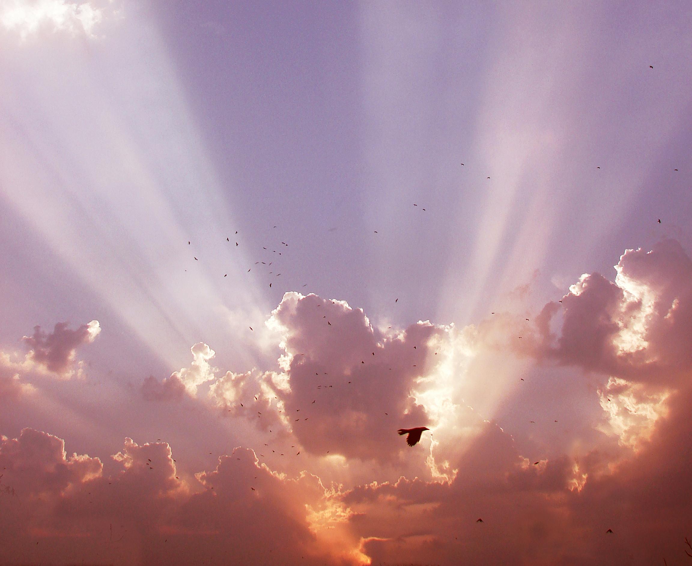 Heavenly light 1600x1200px #618723