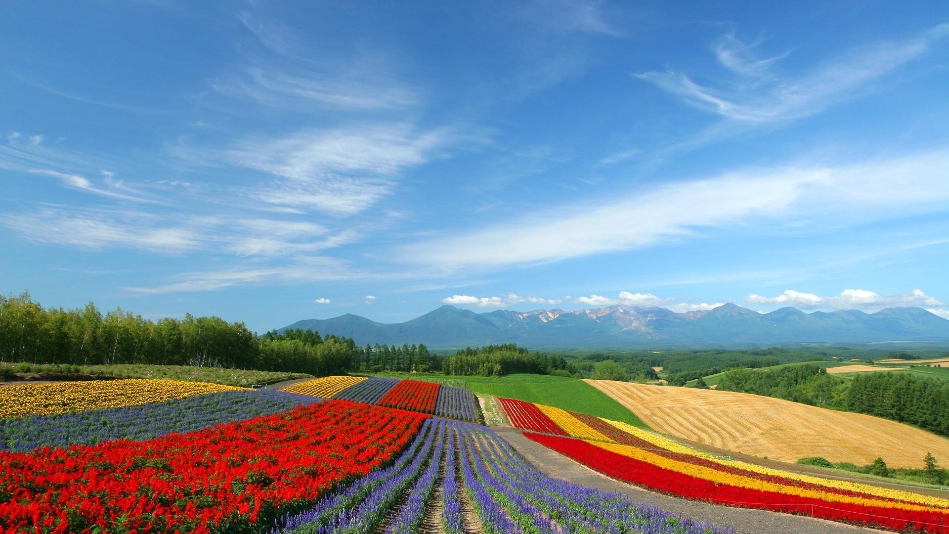 Hokkaido, Japan HD Heavenly Wallpaper Free HD Wallpaper – Download .