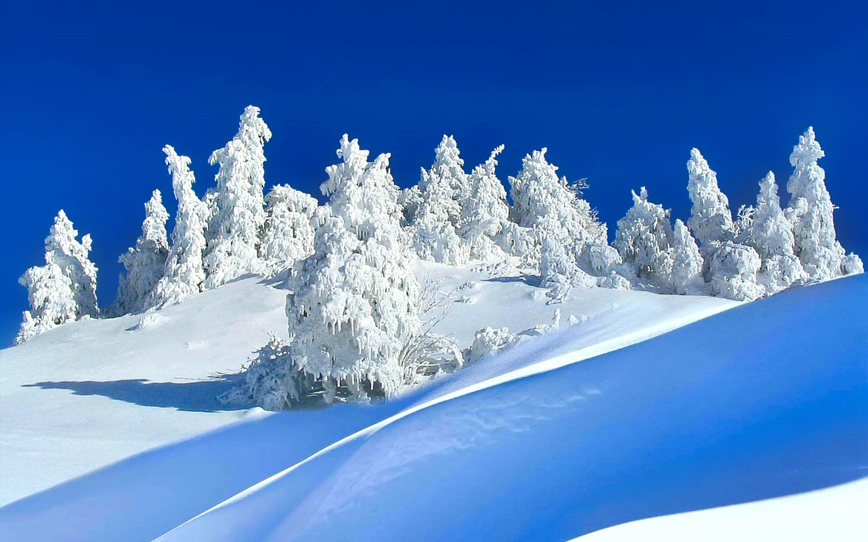 Winter Opus Nature Full HD Heavenly Wallpaper