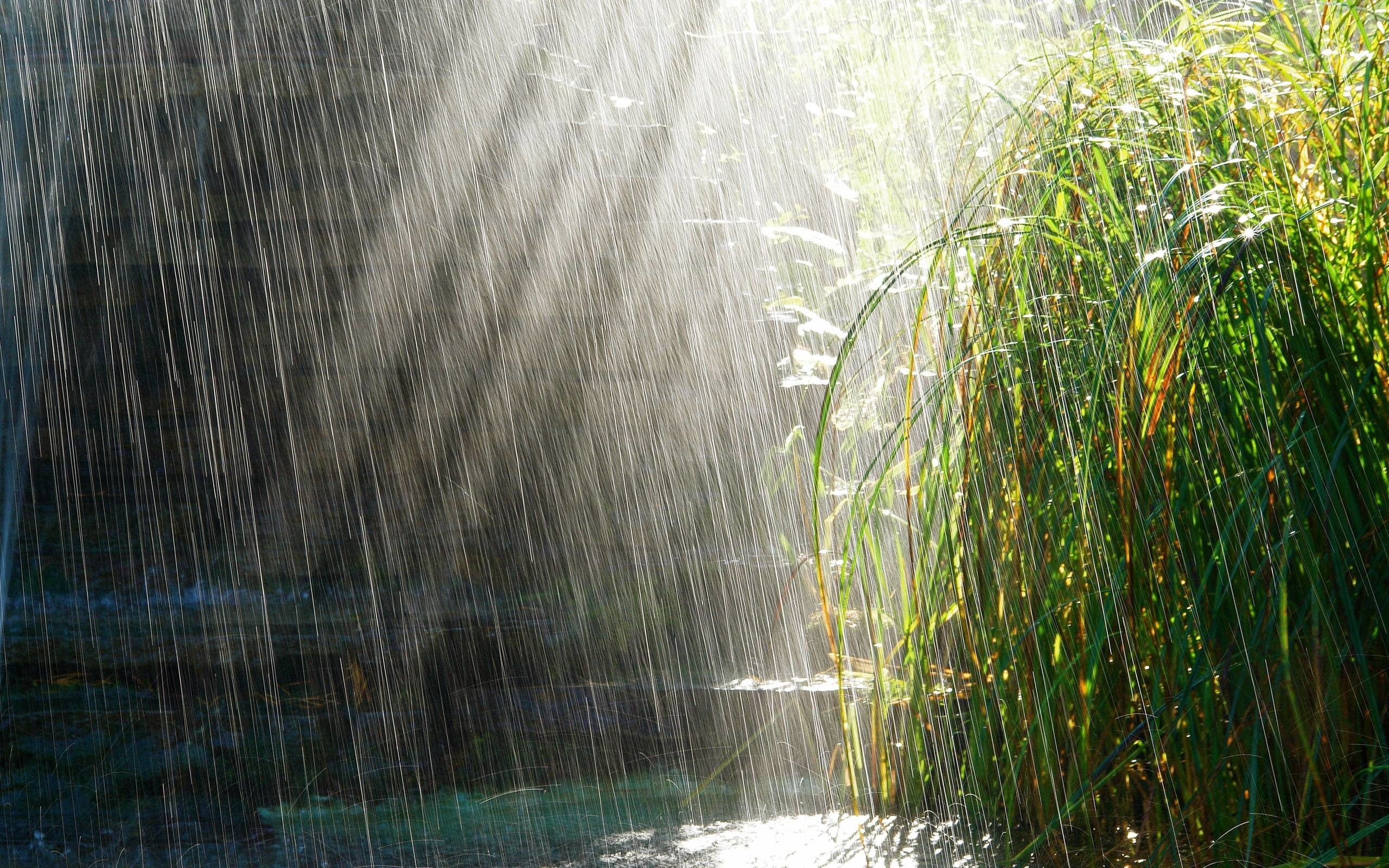 Rainy Day Plant HD Wallpaper