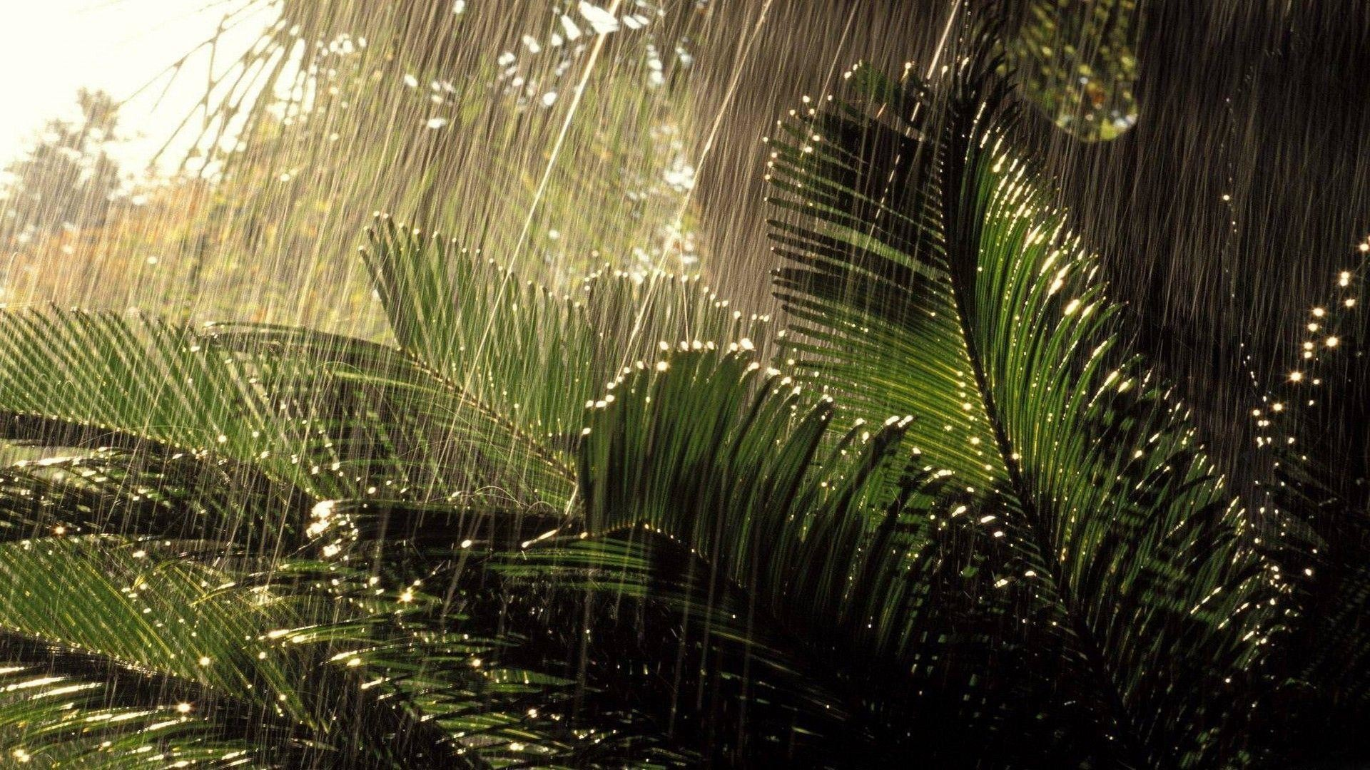 Cool Rainy Day Wallpapers | HD Wallpapers | Desktop Wallpapers