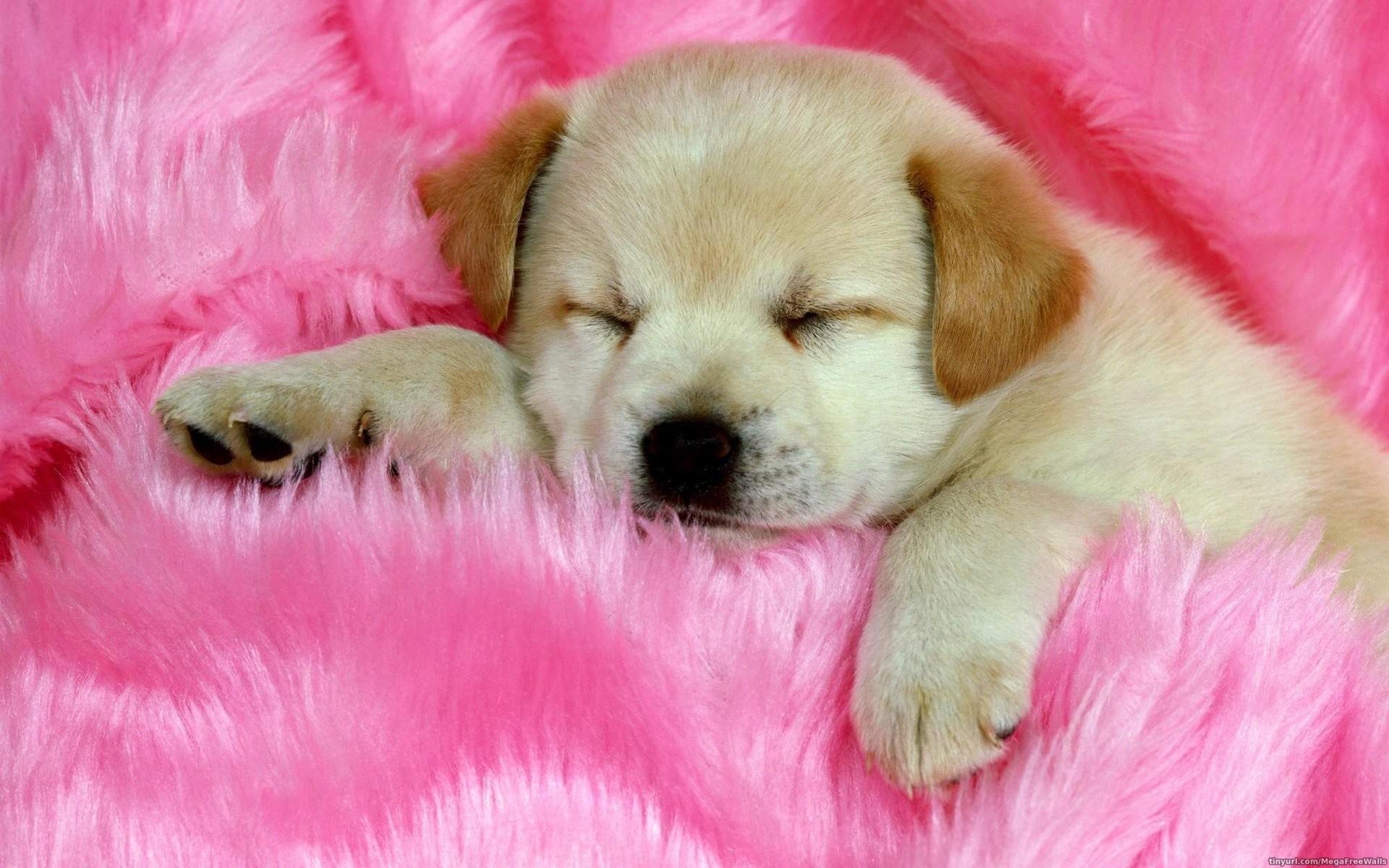 HD Wallpaper | Background ID:277093. Animal Cute
