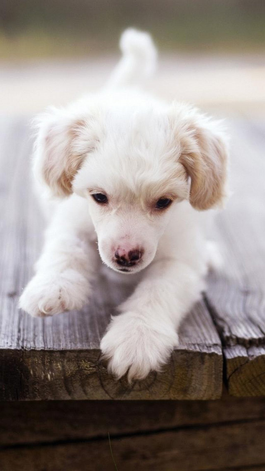 Cute Puppies Wallpapers for iPhone. Animals Phone Backgrounds. | @mobile9