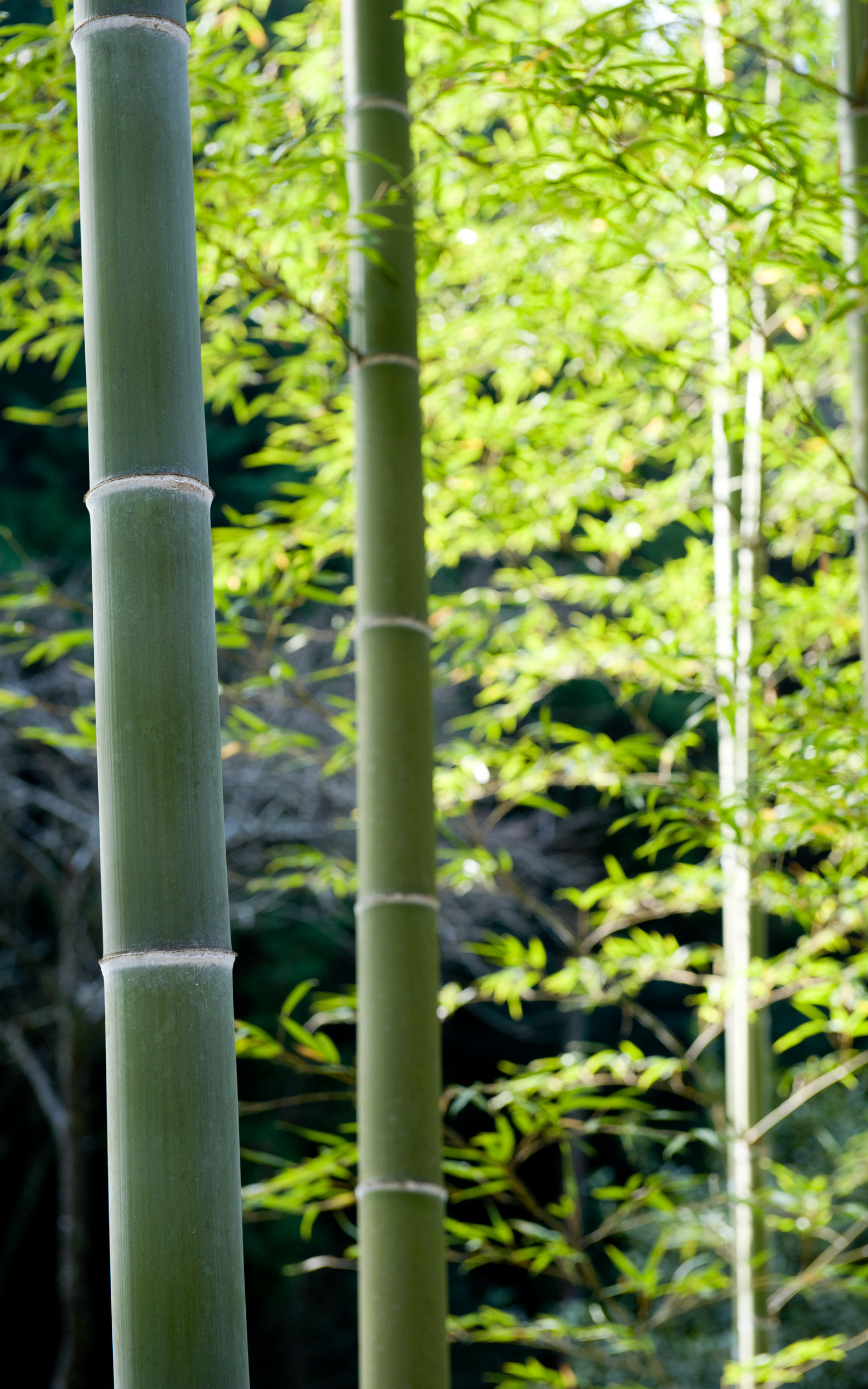 HD Wallpapers 0 HTML code. Jeffrey Friedl's Blog » Today's Photogenic  Adventures in Kyoto