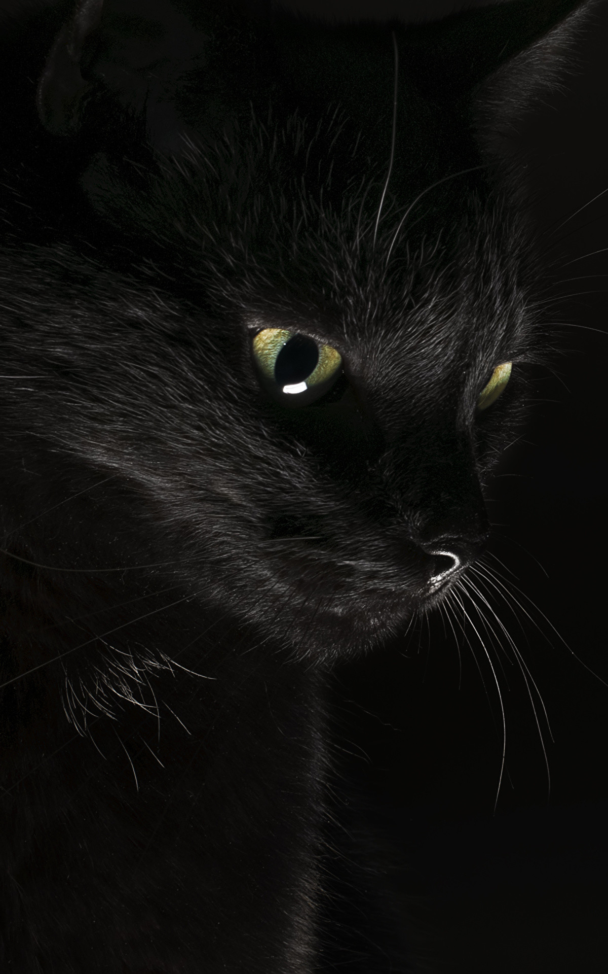 Picture Cats Black Animals Black background 1200×1920