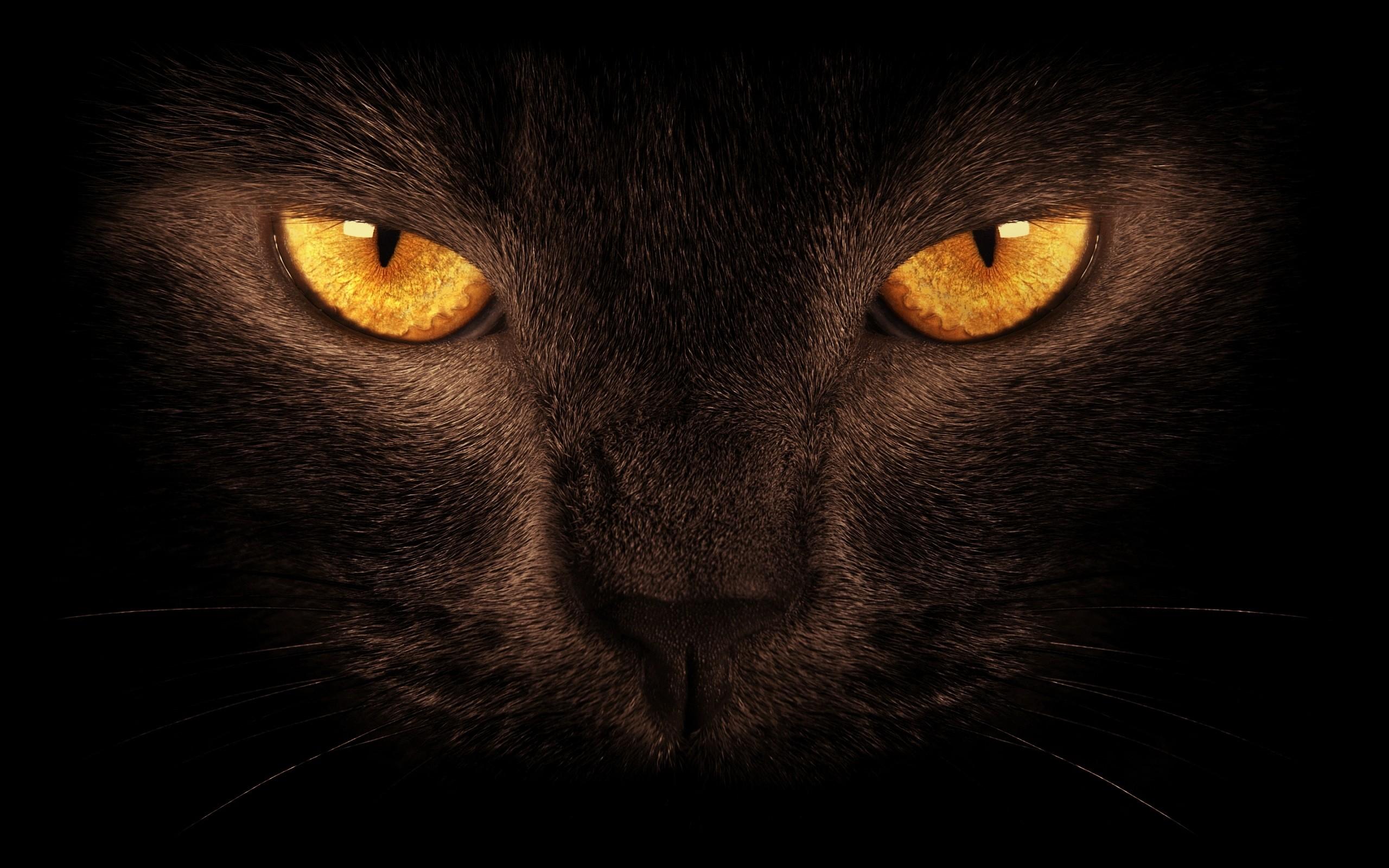 Black cat with orange eyes macro photo