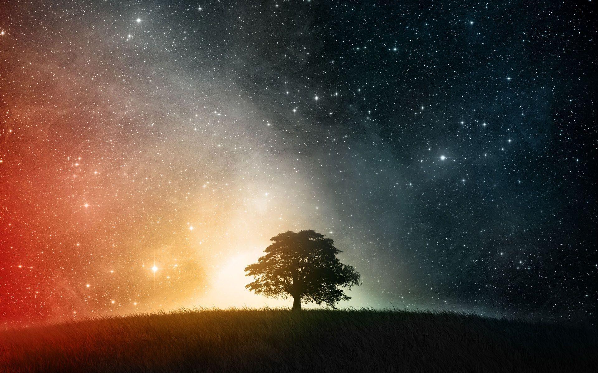Beautiful Tree Shadow on Starry Sky – – Full HD 16/10 .