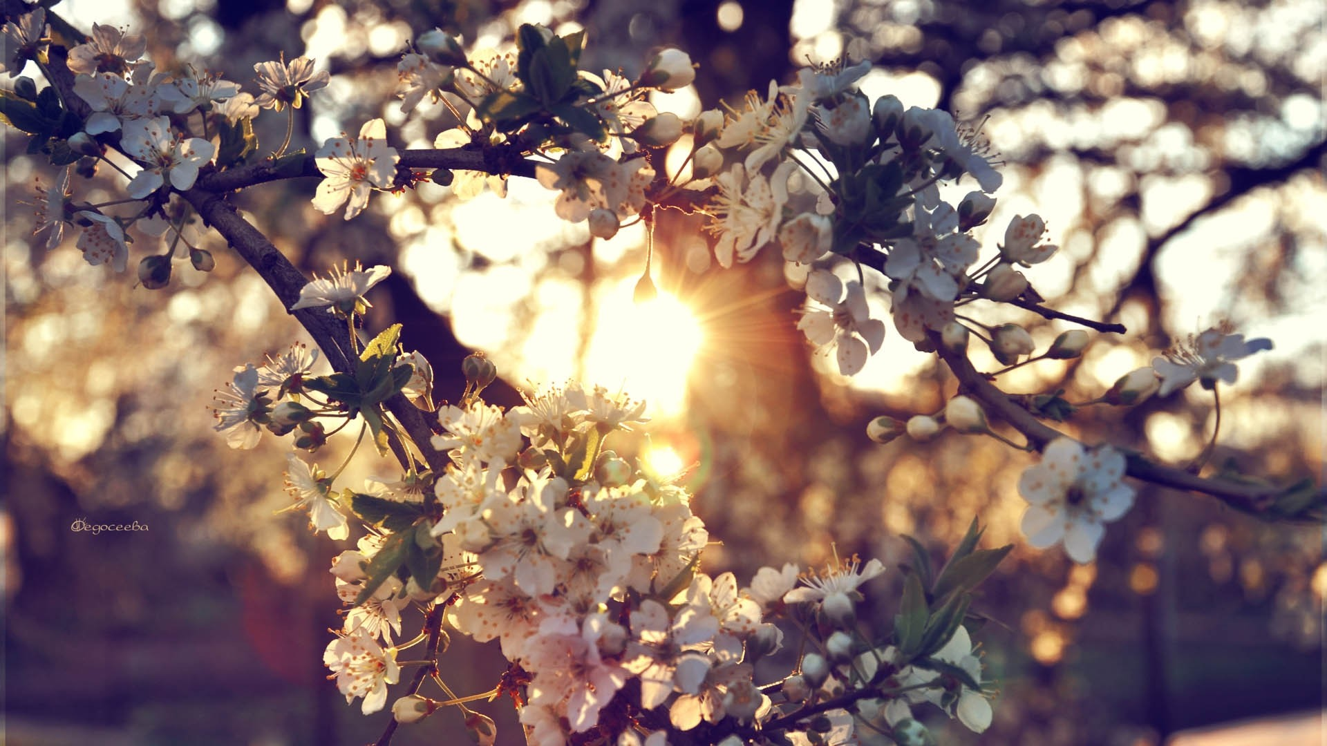 Preview wallpaper branch, flowers, spring 1920×1080