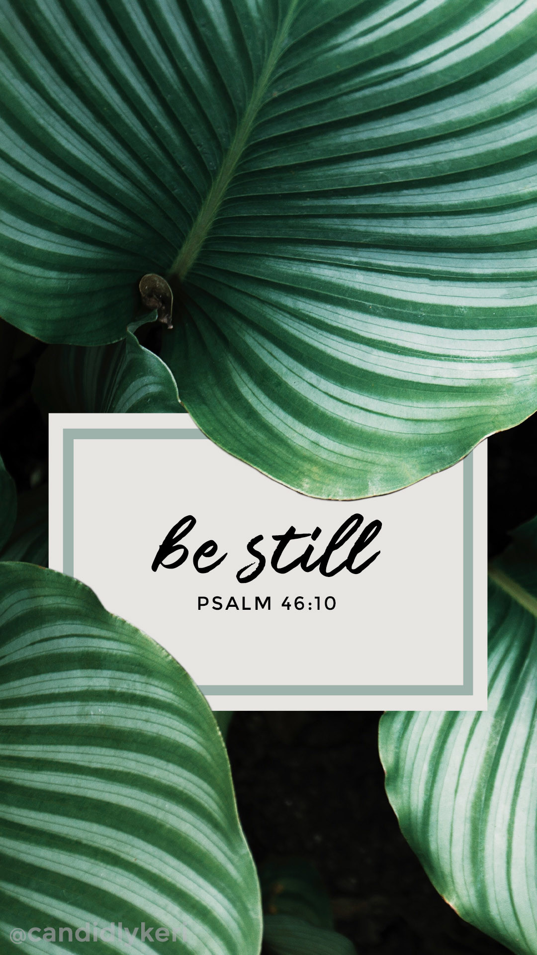 Be Still Psalm 46:10 bible quote leaf palms inspirational calming quote  2017 wallpaper you