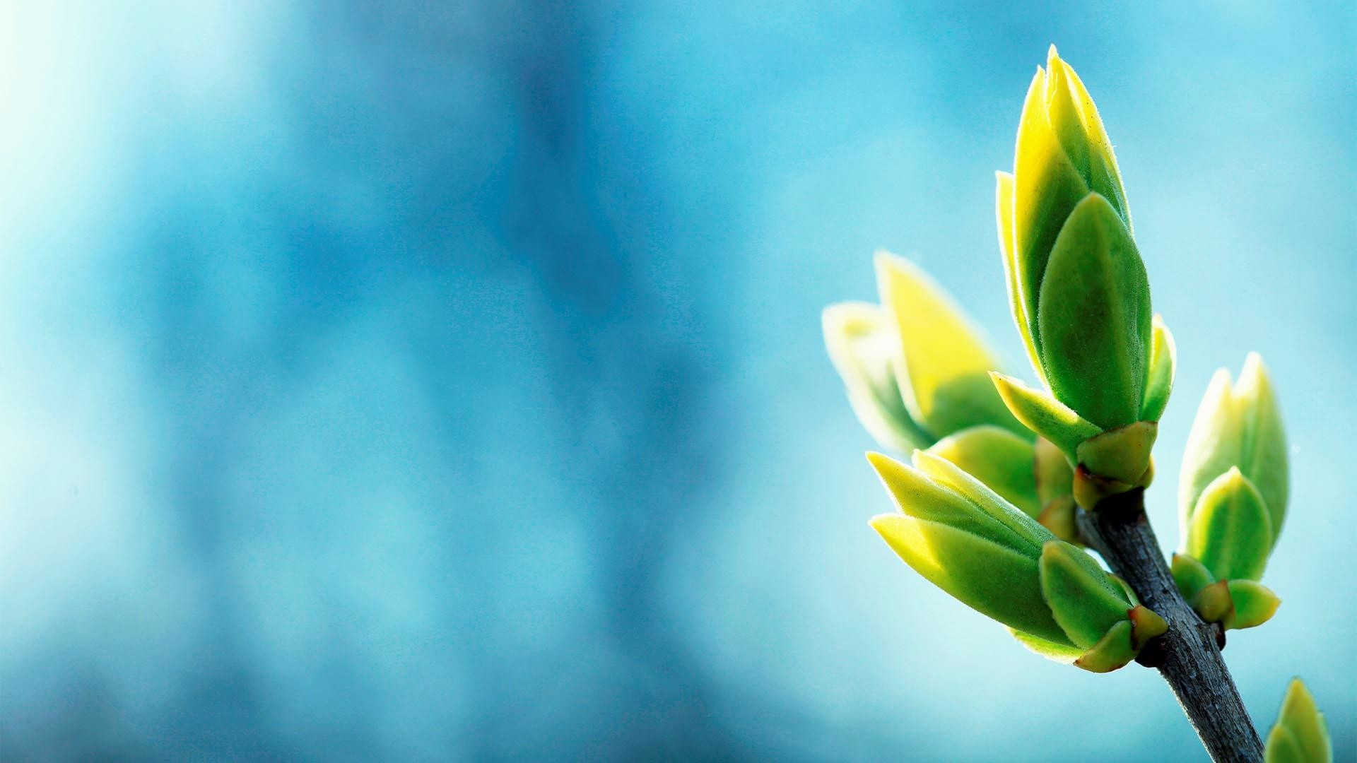wallpaper.wiki-Blue-and-green-Calming-Backgrounds-PIC-