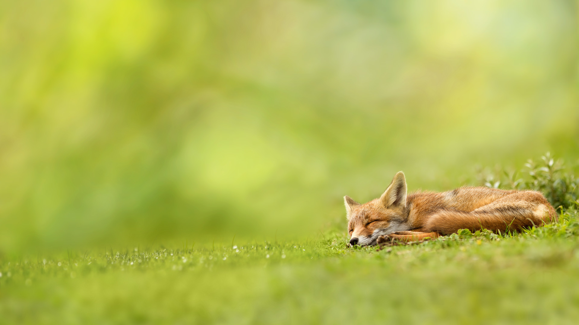 Peaceful Wallpapers High Quality Resolution …