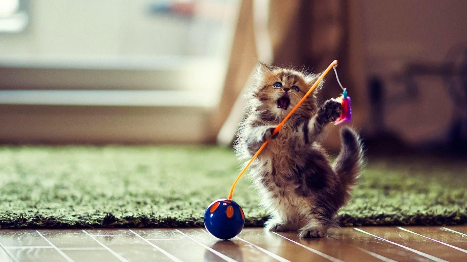 Funny-Cute-Cat-Playing-Wallpaper-Desktop-