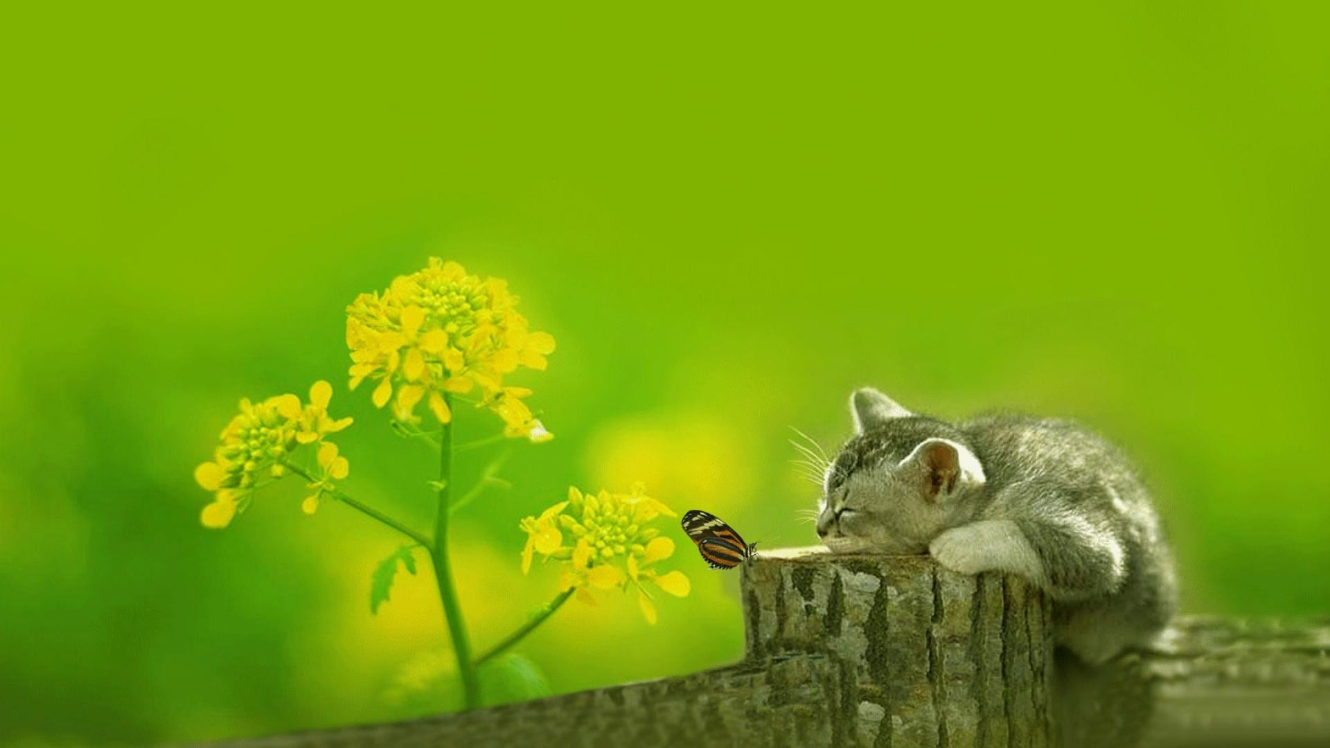 wallpaper.wiki-Desktop-cute-images-hd-download-PIC-
