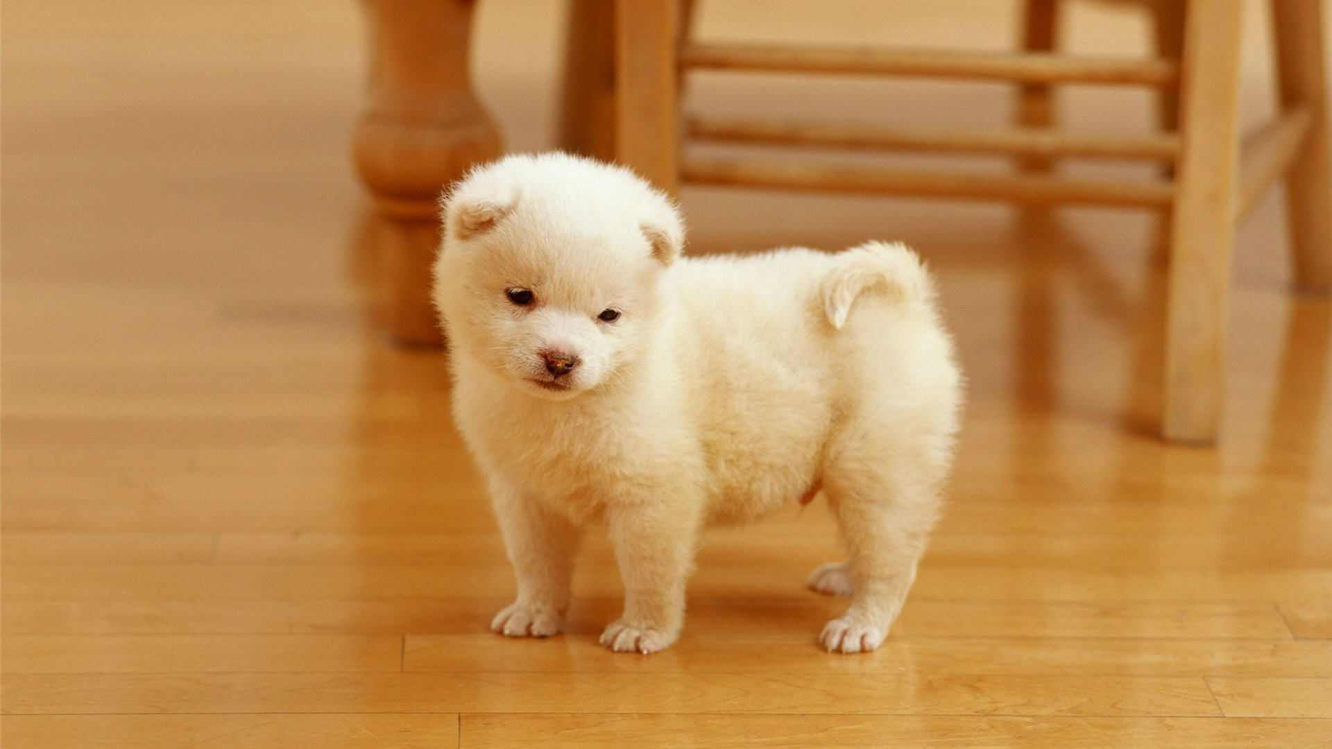 Check out Cutest puppy HD Wallpapers. We add quality wallpapers, cover  pictures and funny pictures on a daily basis.