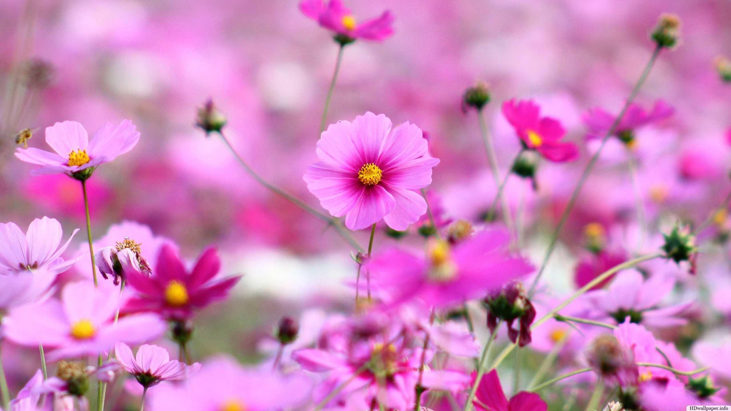 cute flowers wallpapers desktop