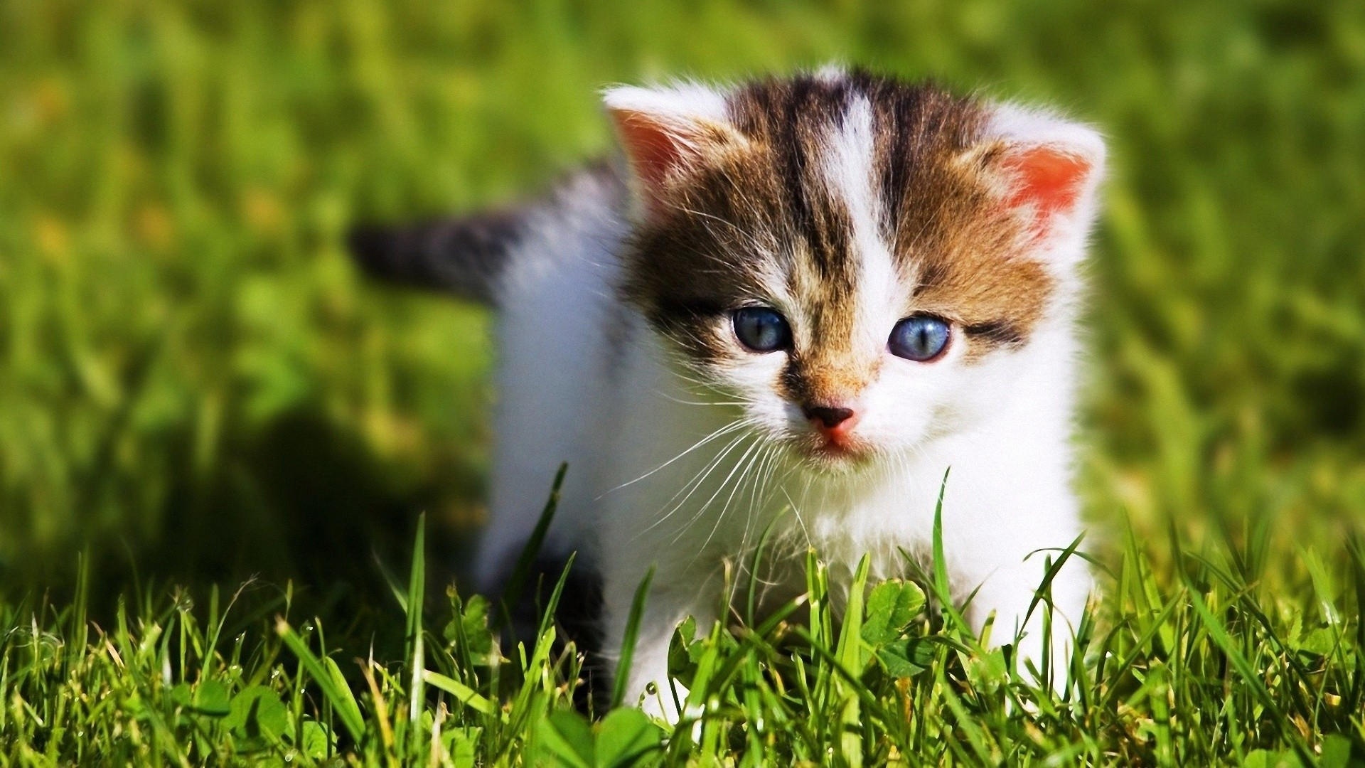Cute Baby Cat Beautiful Baby HD Wallpaper