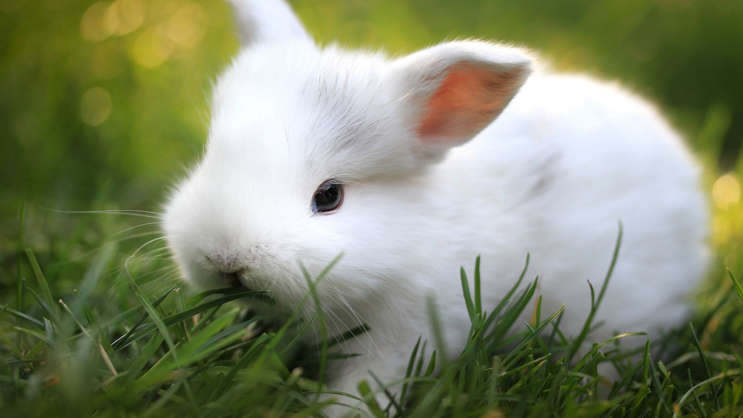 Free Cute Bunny Wallpaper · Rabbit WallpaperHd WallpaperWallpapersDesktop  …