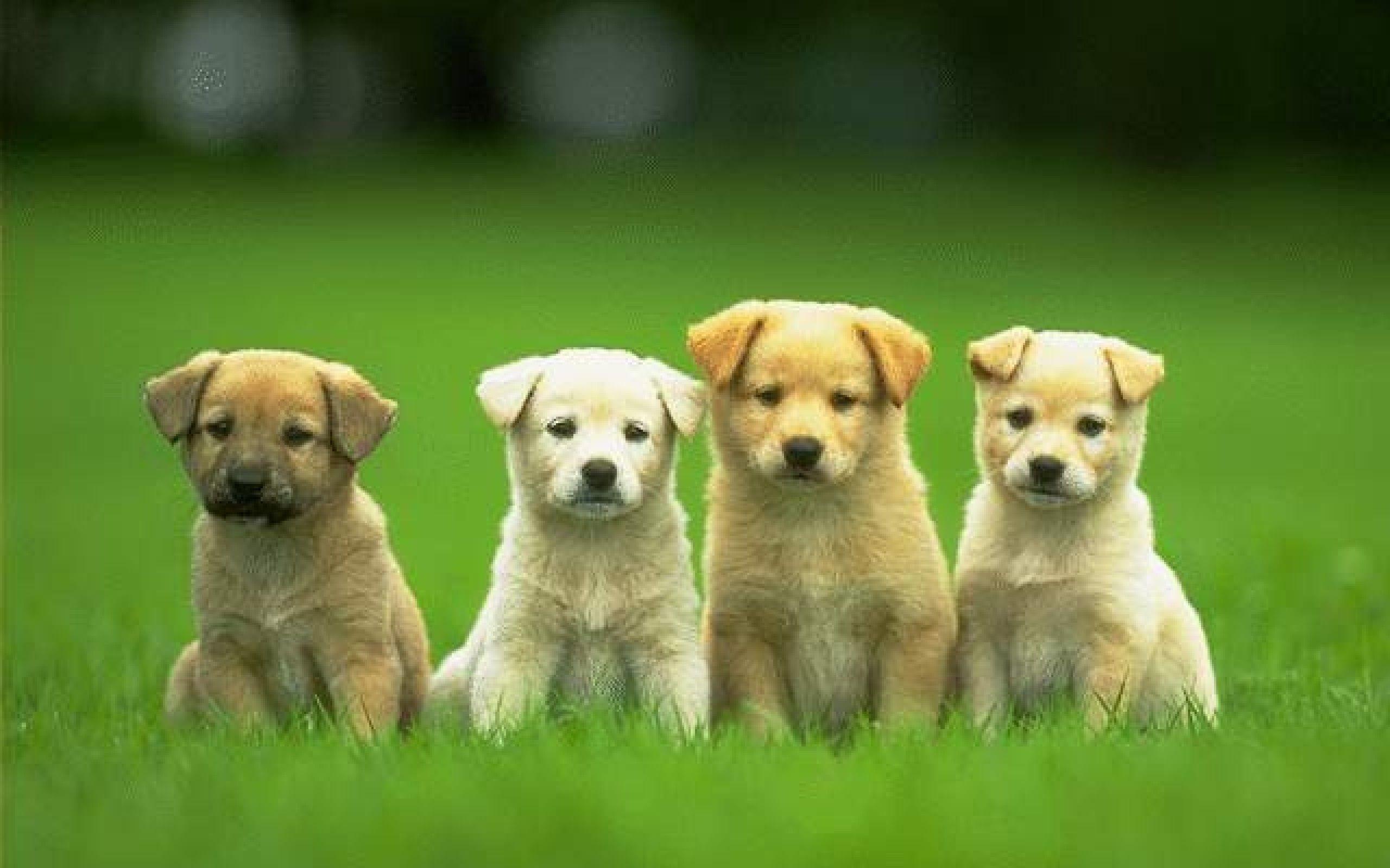 Four Cute Puppy Dog Wallpaper HD Wallpaper Backgrounds Tumblr .
