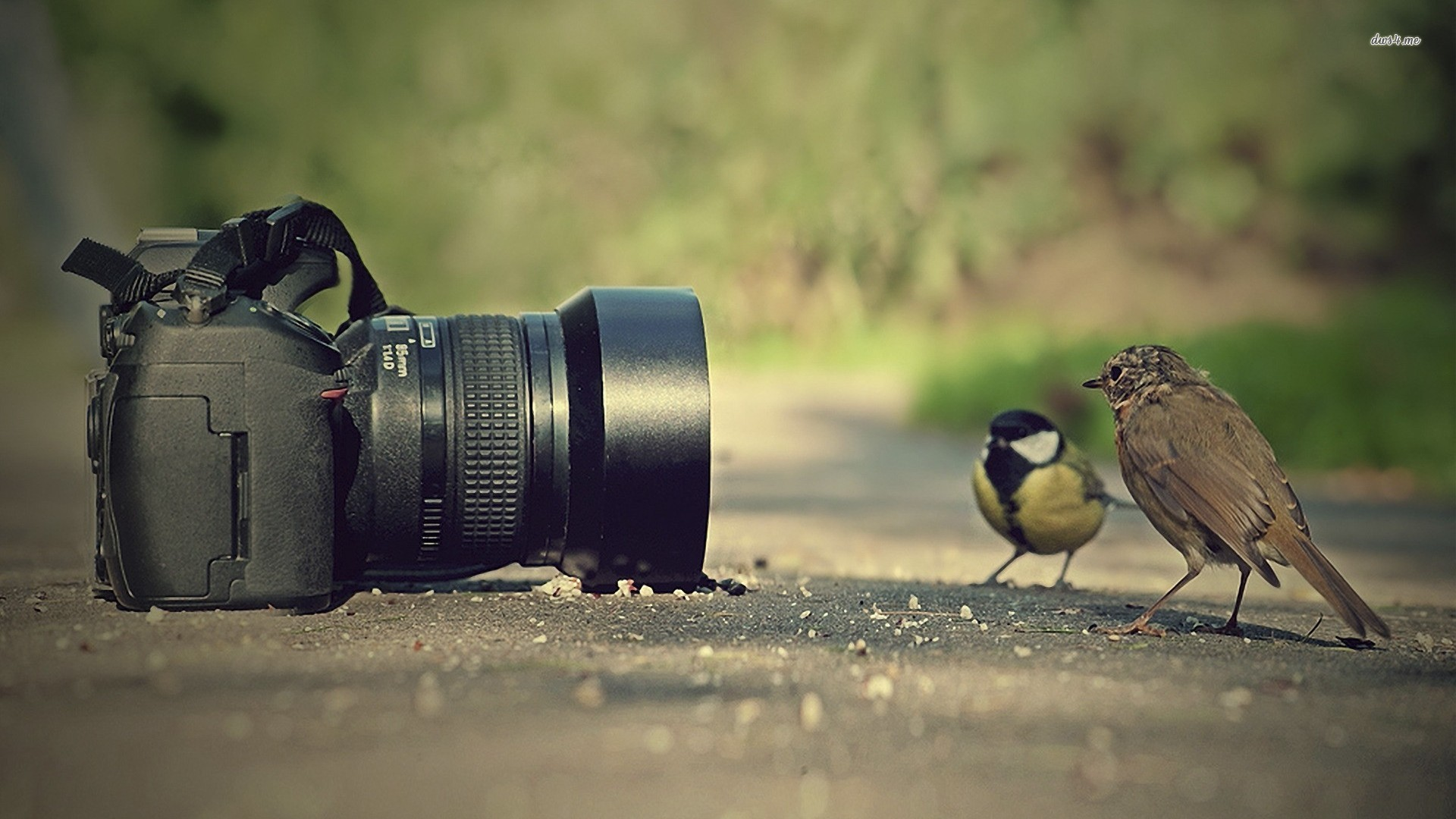 Photography HD Wallpaper Background