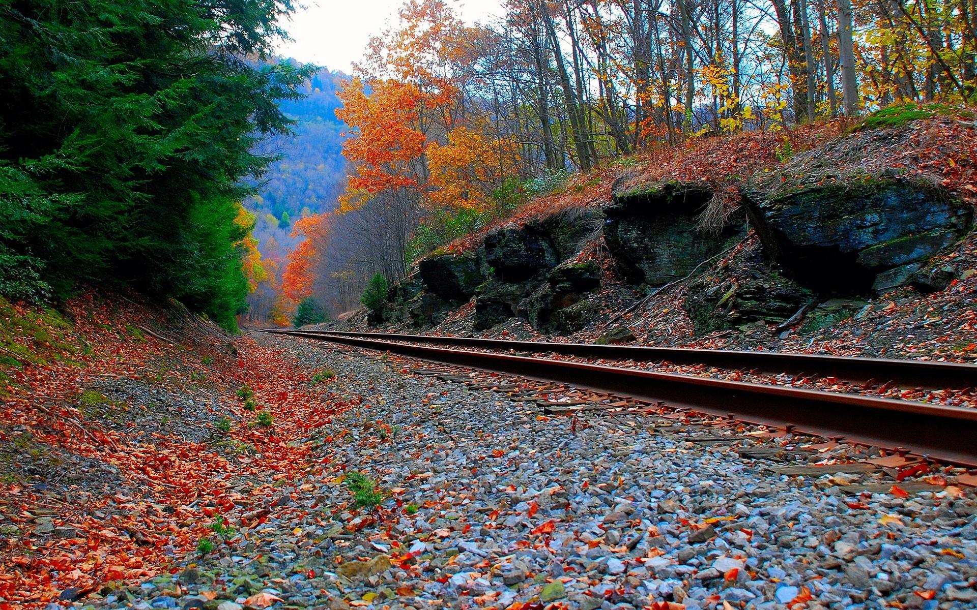 Wallpaper forest, autumn, rails, railroad, Railway in autumn forest.