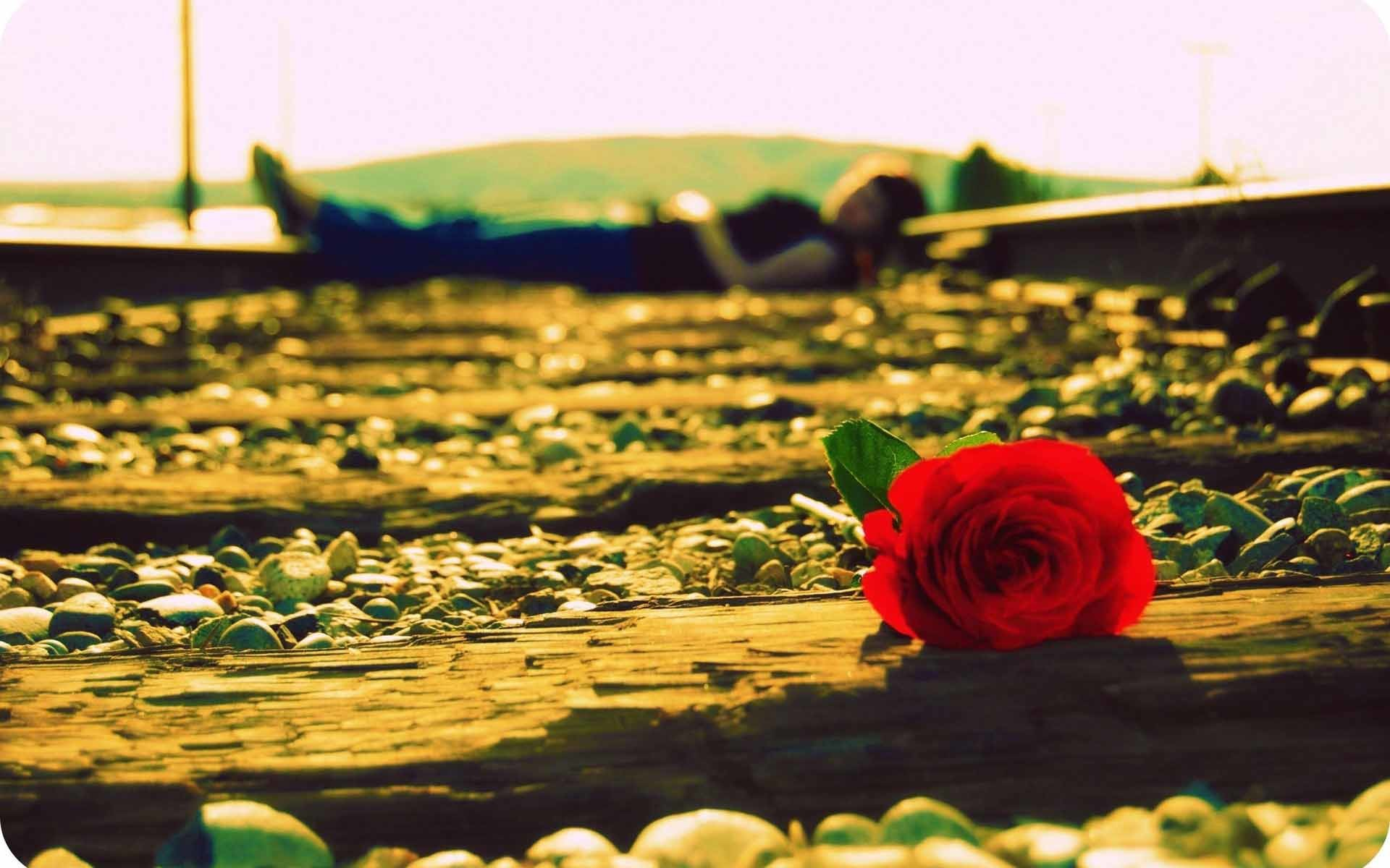 Alone girl on train track with rose love image
