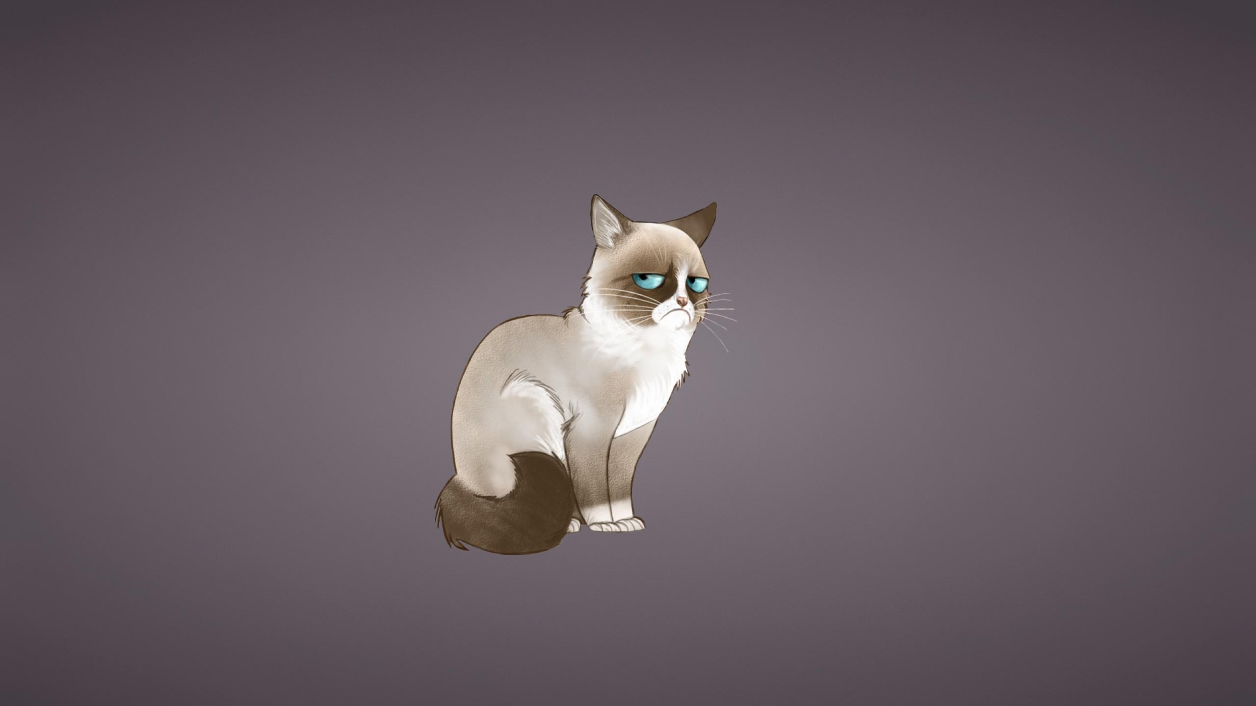 Wallpaper grumpy cat, meme, cat