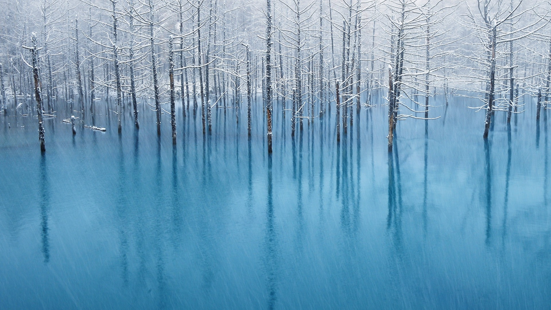 Preview wallpaper rain, blue water, flood, trees, hoarfrost, garden  1920×1080