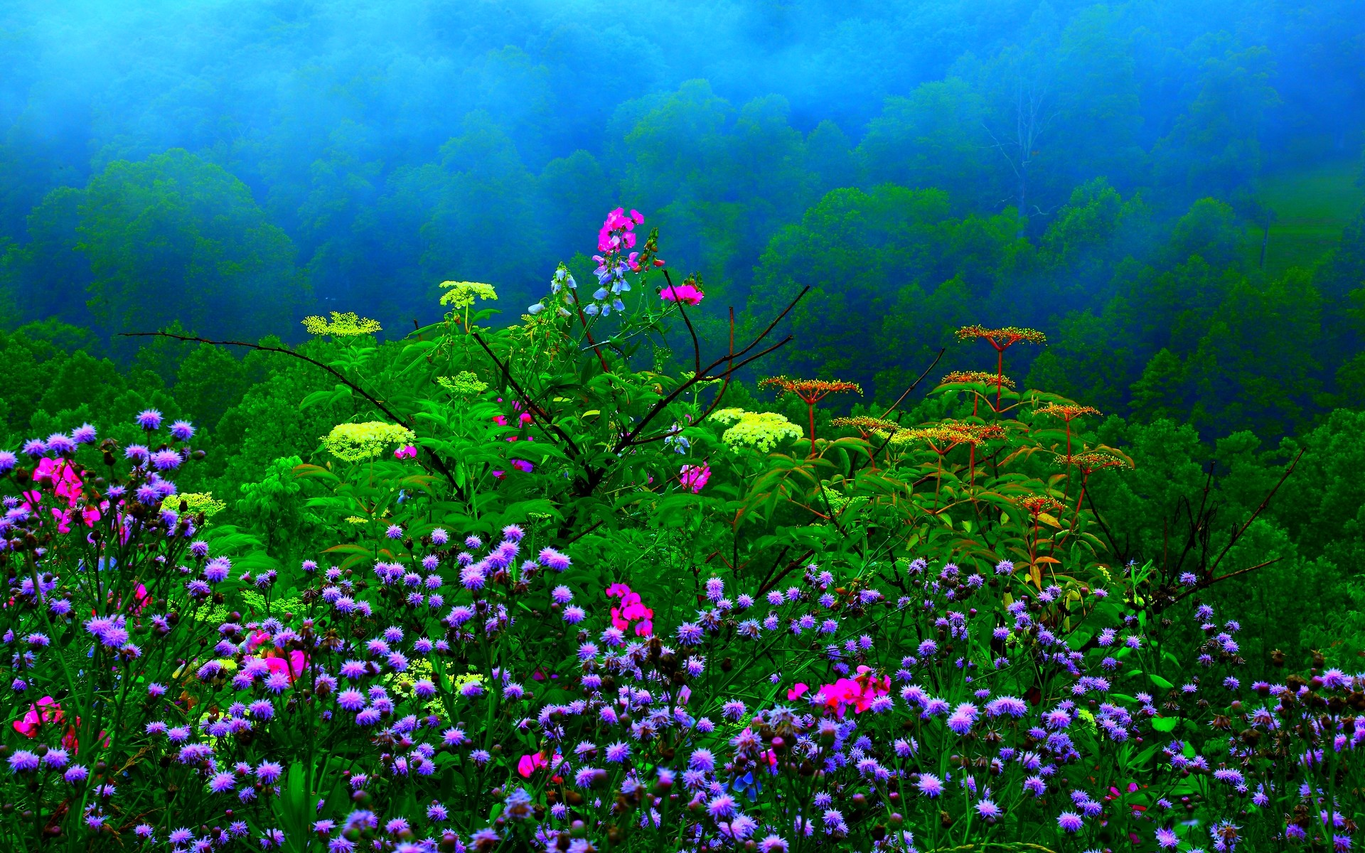 Dream Spring 2012 – spring rain Wallpapers – HD Wallpapers 96975