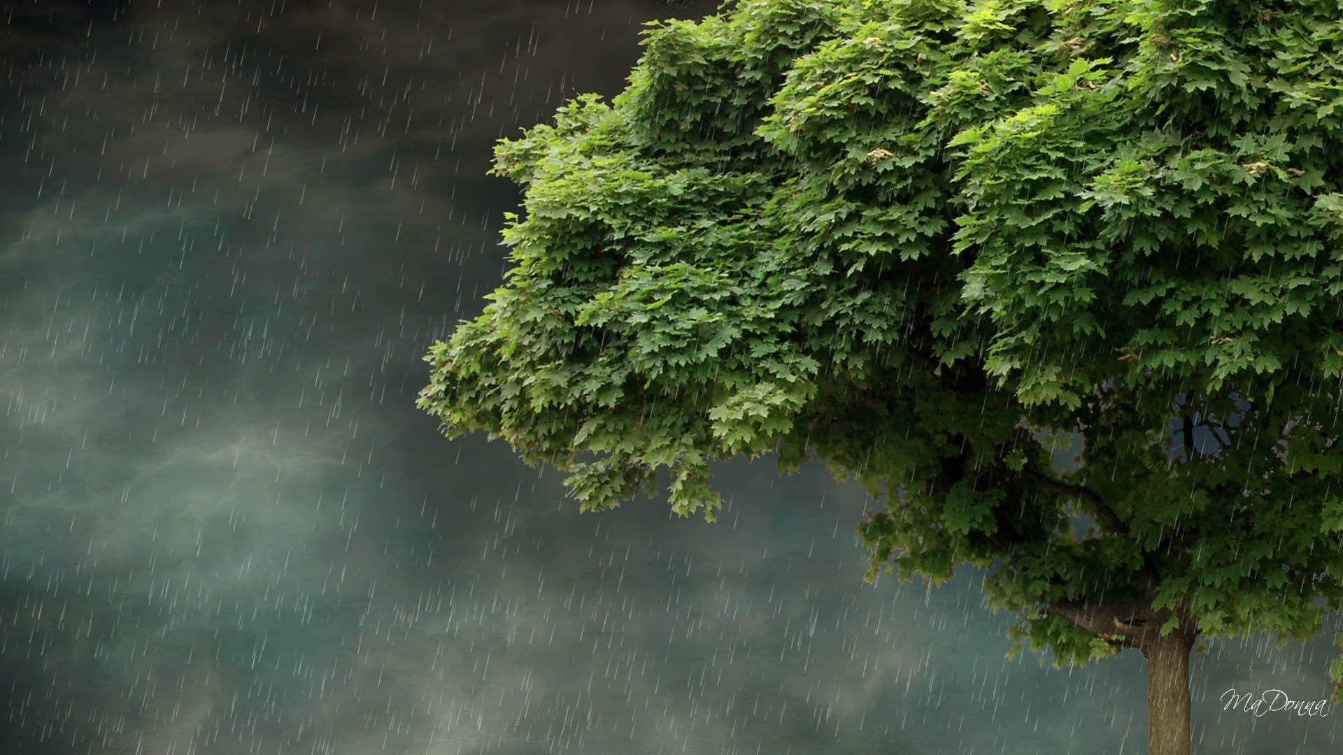 … Rainy Spring Desktop Wallpaper Wallpapersafari. Download