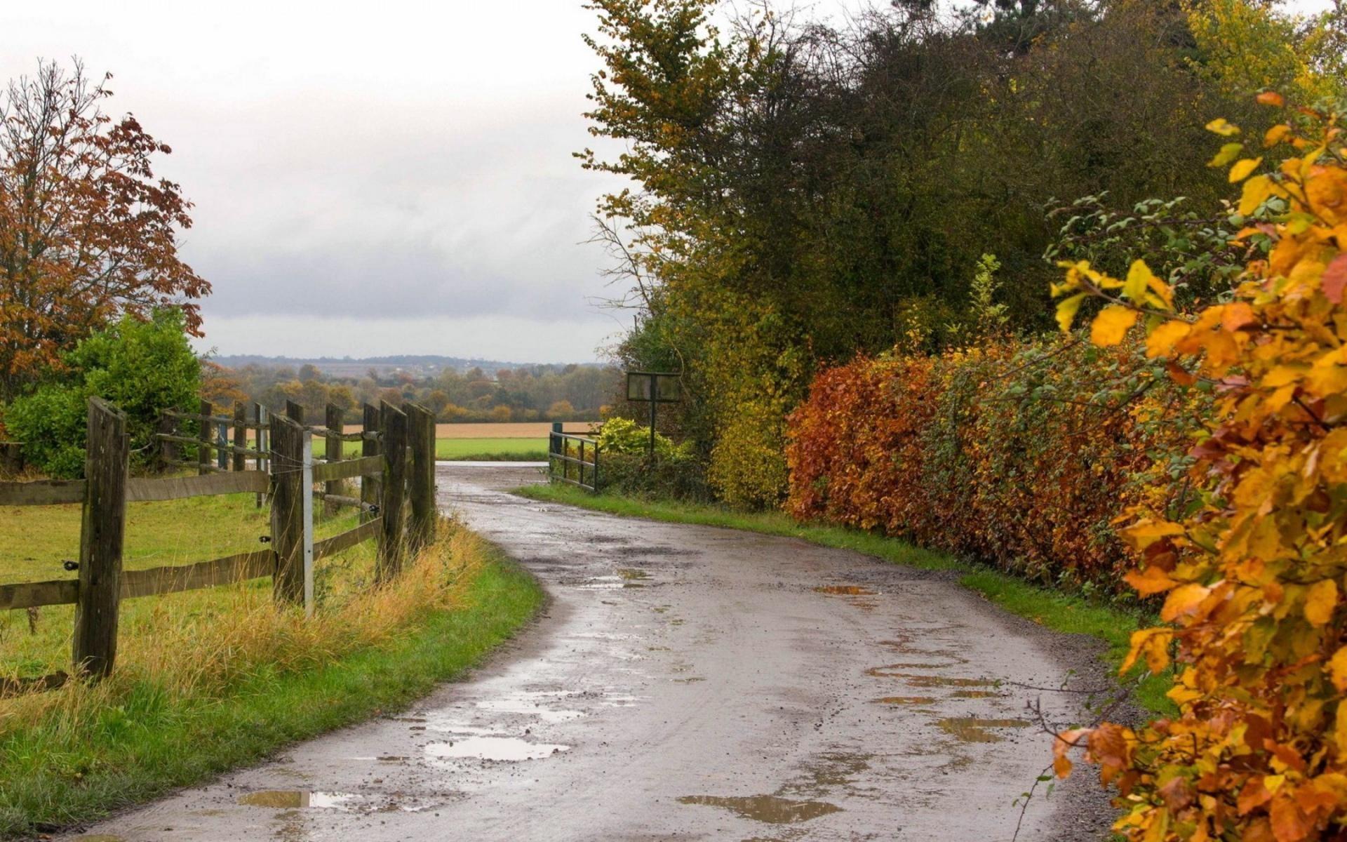 Roads Autumn Fall Rain Wet Water Reflection Fence Landscapes Trees Desktop  Backgrounds