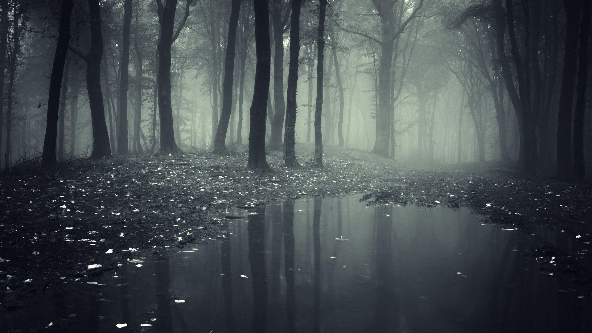 Rain Tag – Nature Mystic Fog Mist Forest Dark Rain HD Picture Download for  HD 16