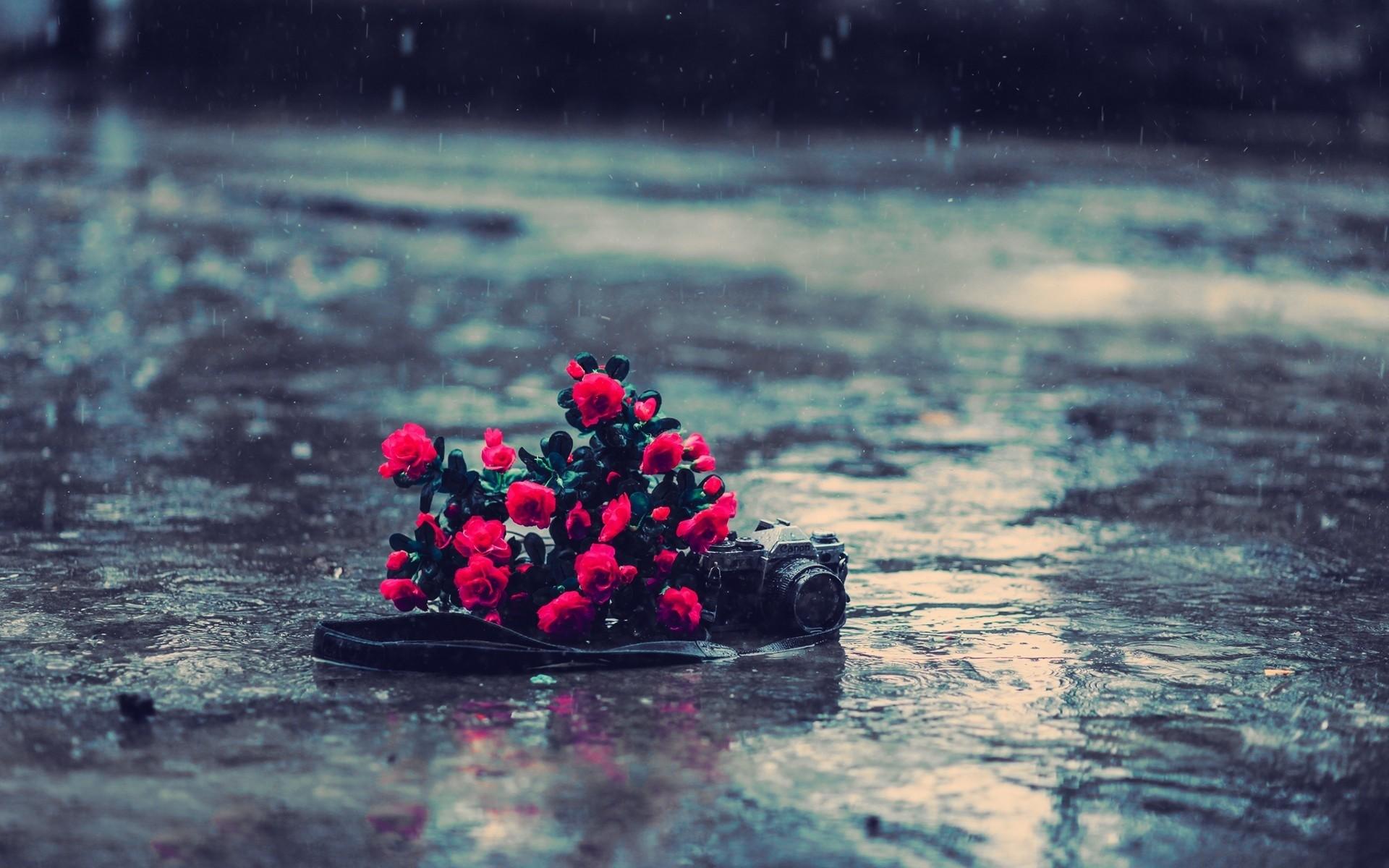 Rain Pictures …