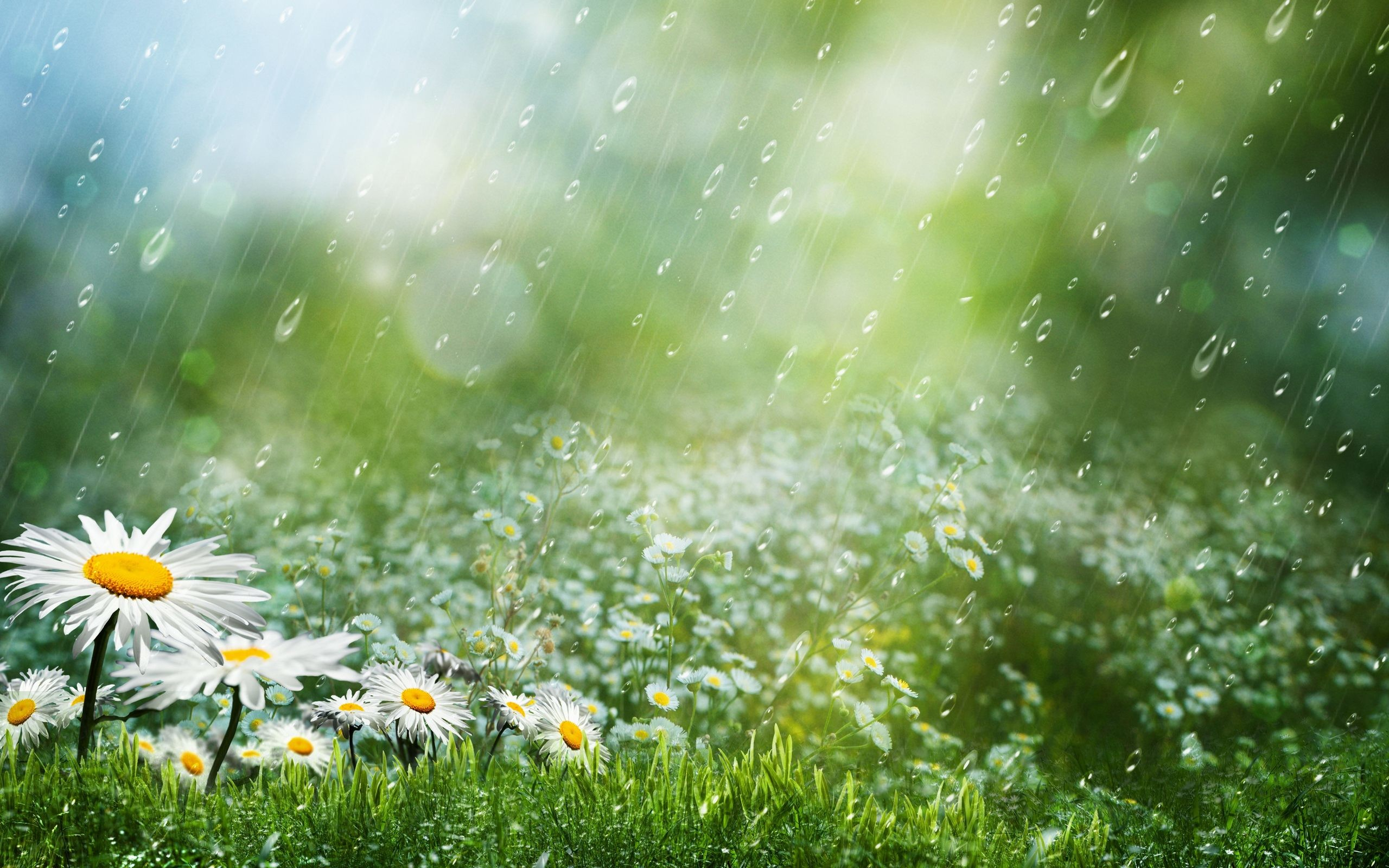 Rain Wallpapers Free …